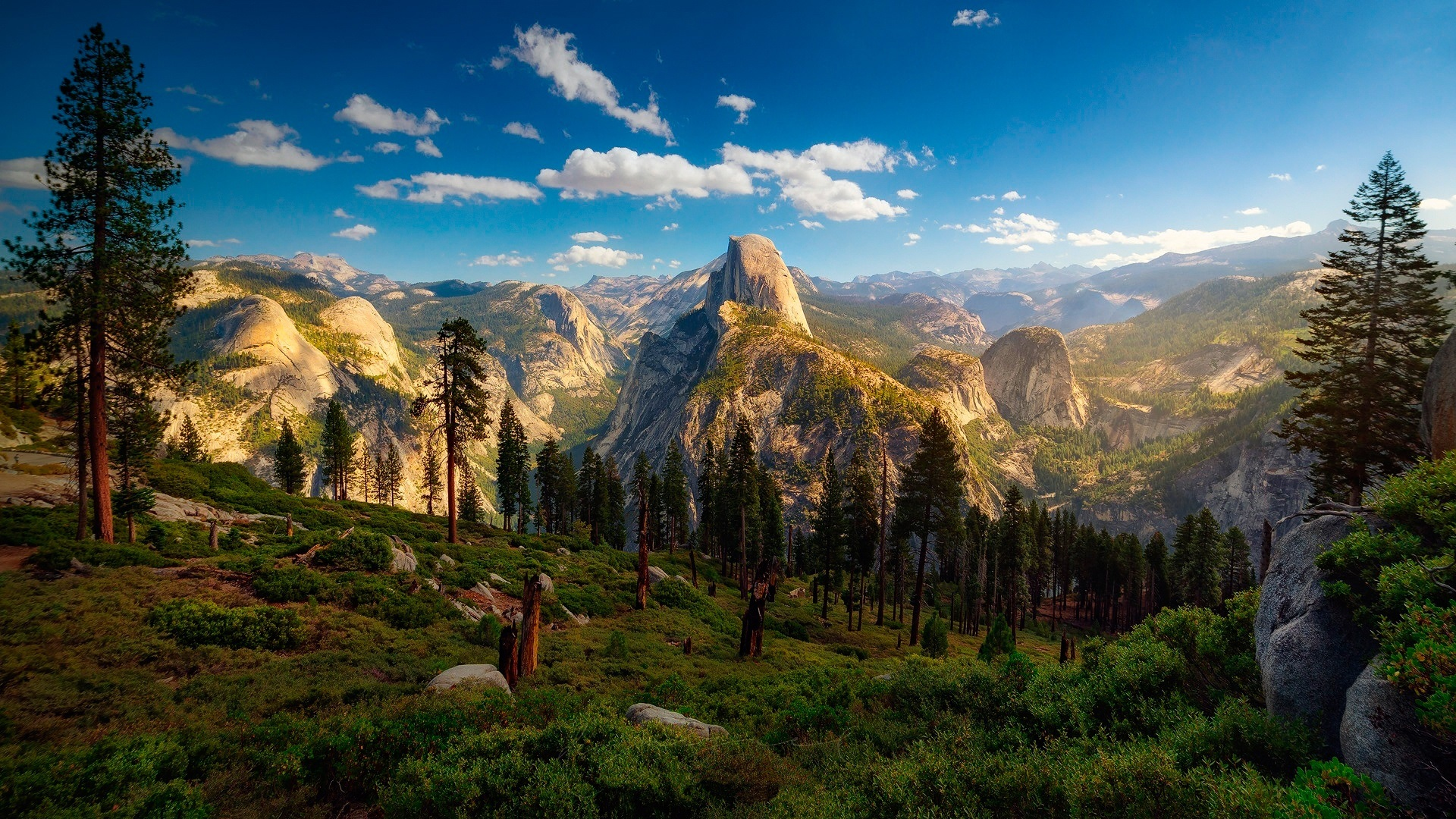 USA, Yosemite National Park, forest, trees, mountain ...