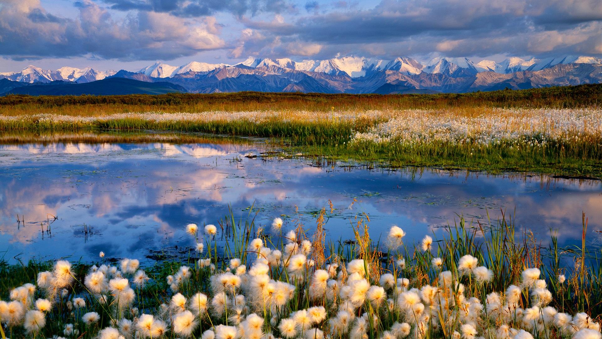 Облака, трава, цветы, озеро  № 1963136  скачать