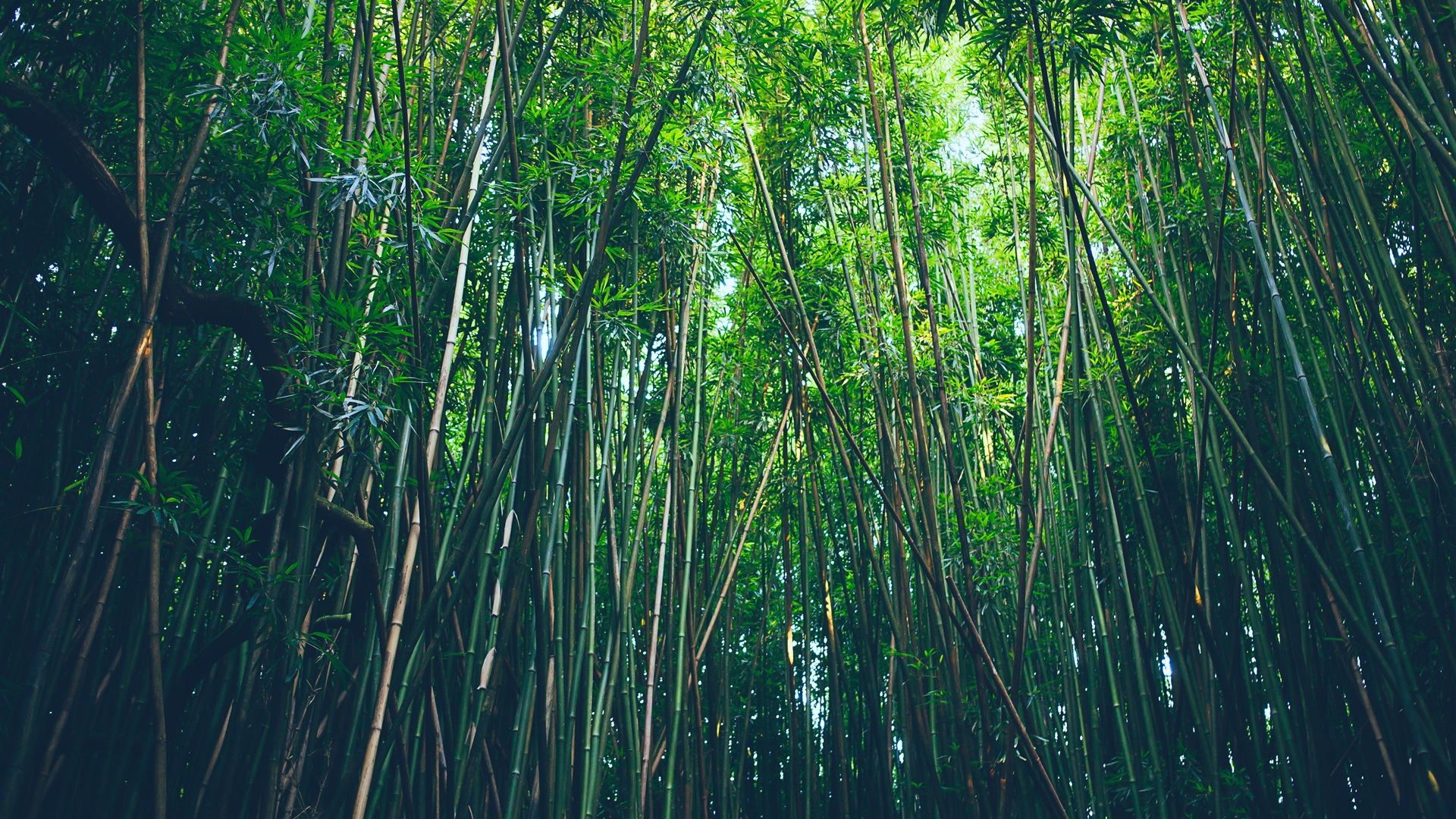 bamboo forest wallpaper hd