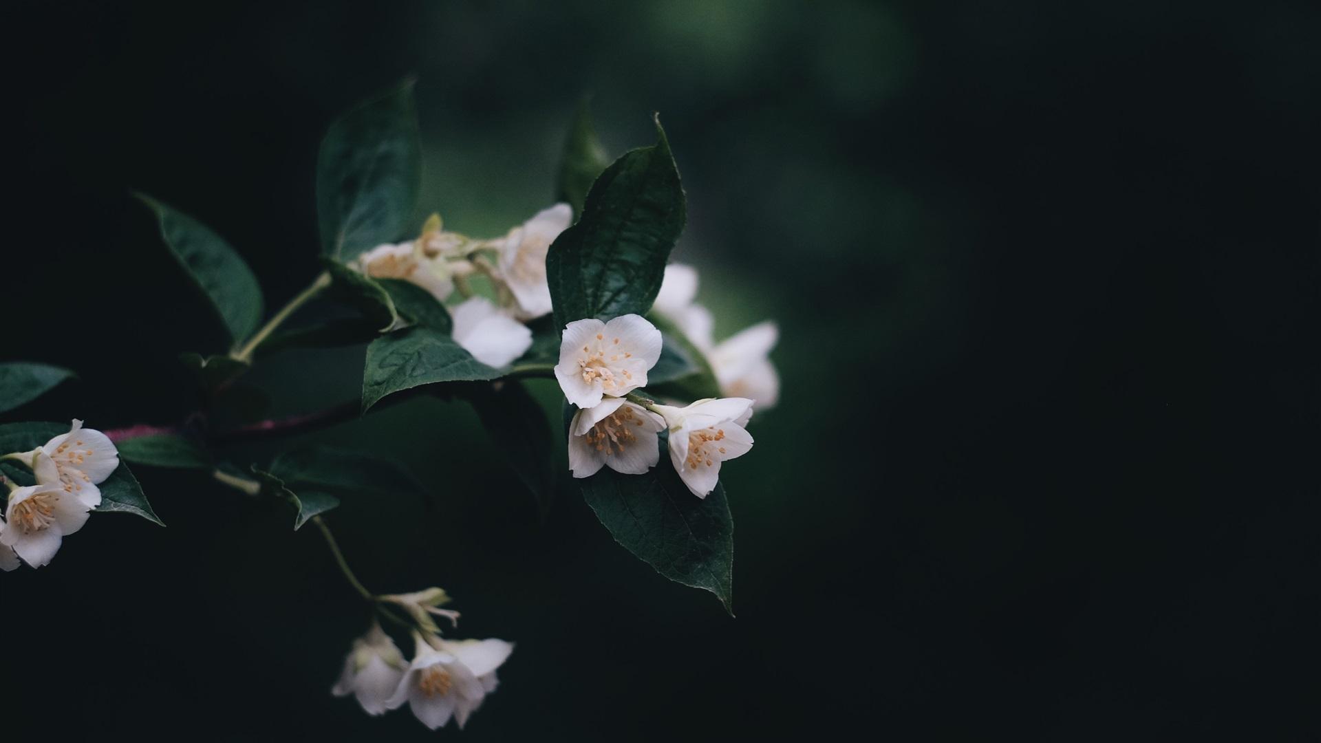 white flower wallpaper 1920x1080 - photo #28