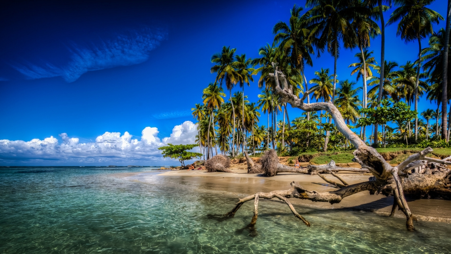 Karibik palmen strand meer wolken dominikanische republik 1920x1080 full hd - Wallpaper dominican republic ...