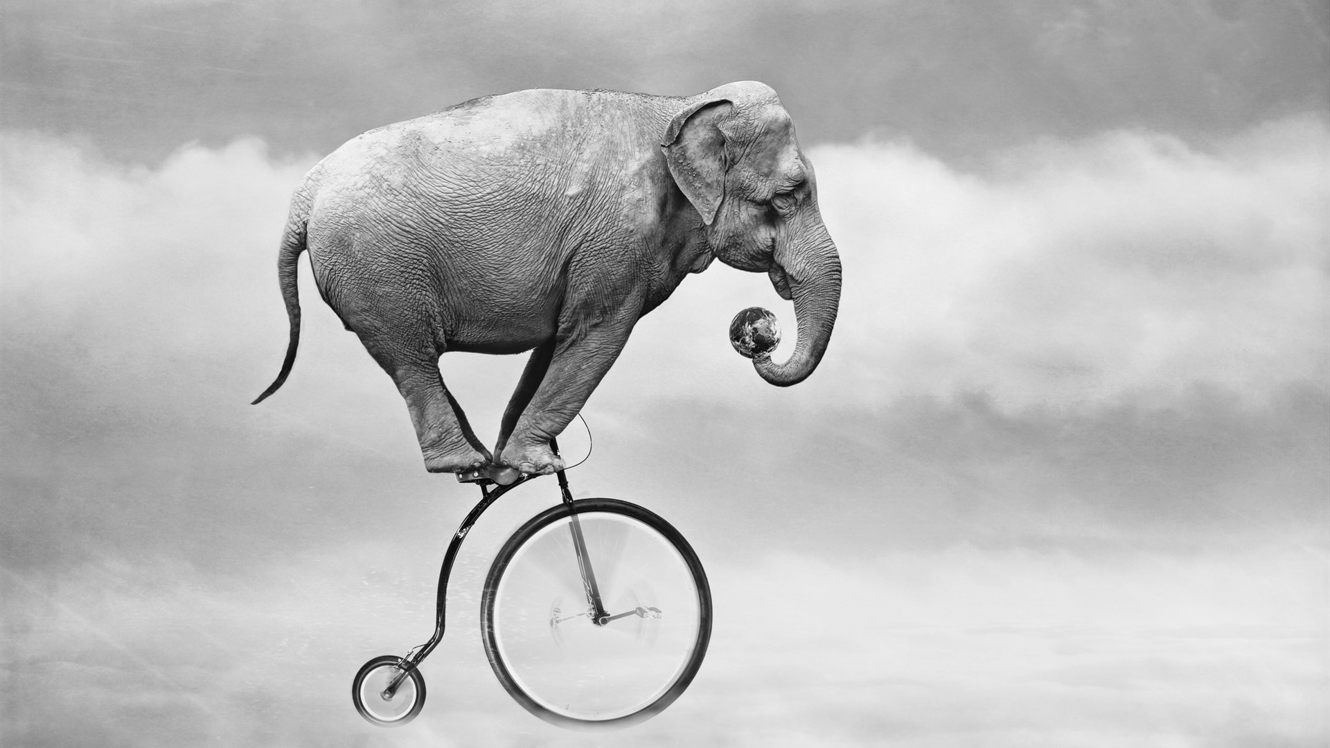 Elephant design wallpaper