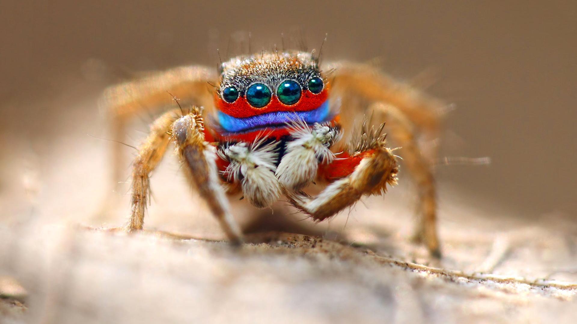 壁纸 蜘蛛微距摄影,眼睛,昆虫 1920x1080 Full HD 2K 高清壁纸, 图片, 照片