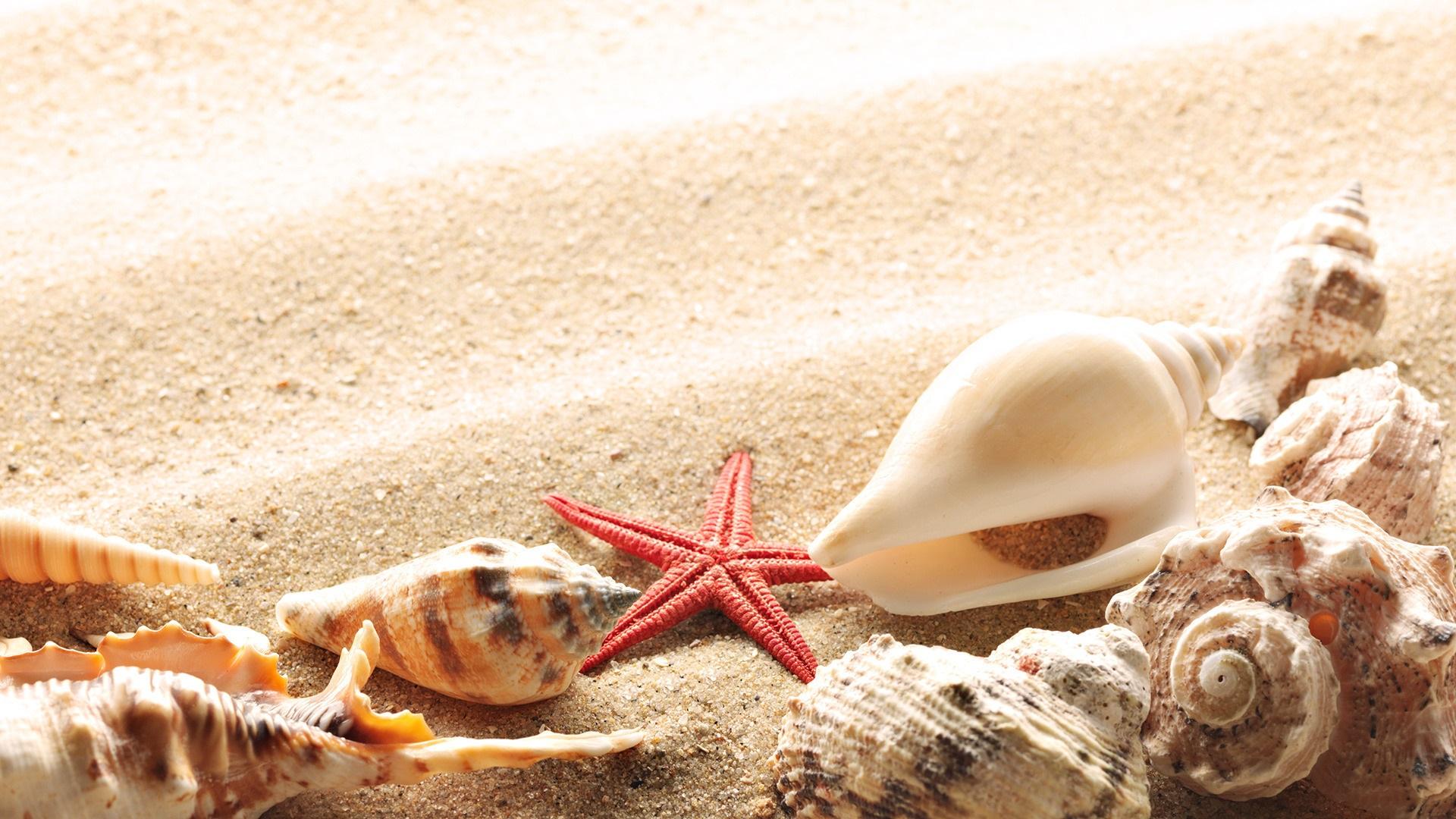 壁紙 ビーチ 砂浜 貝殻 ヒトデ 19x1080 Full Hd 2k 無料のデスクトップの背景 画像