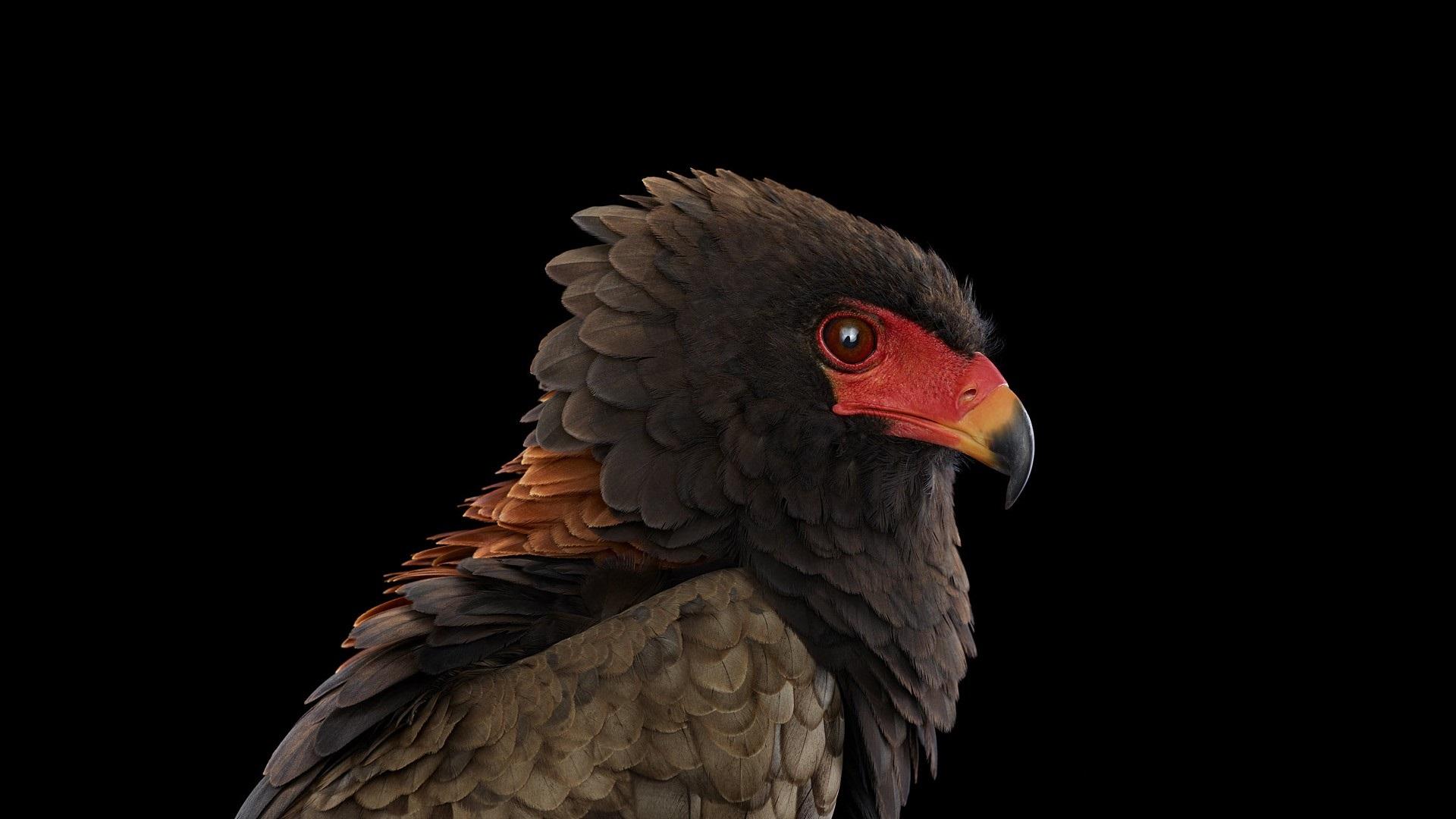 этих фото птиц на черном фоне героиня этого