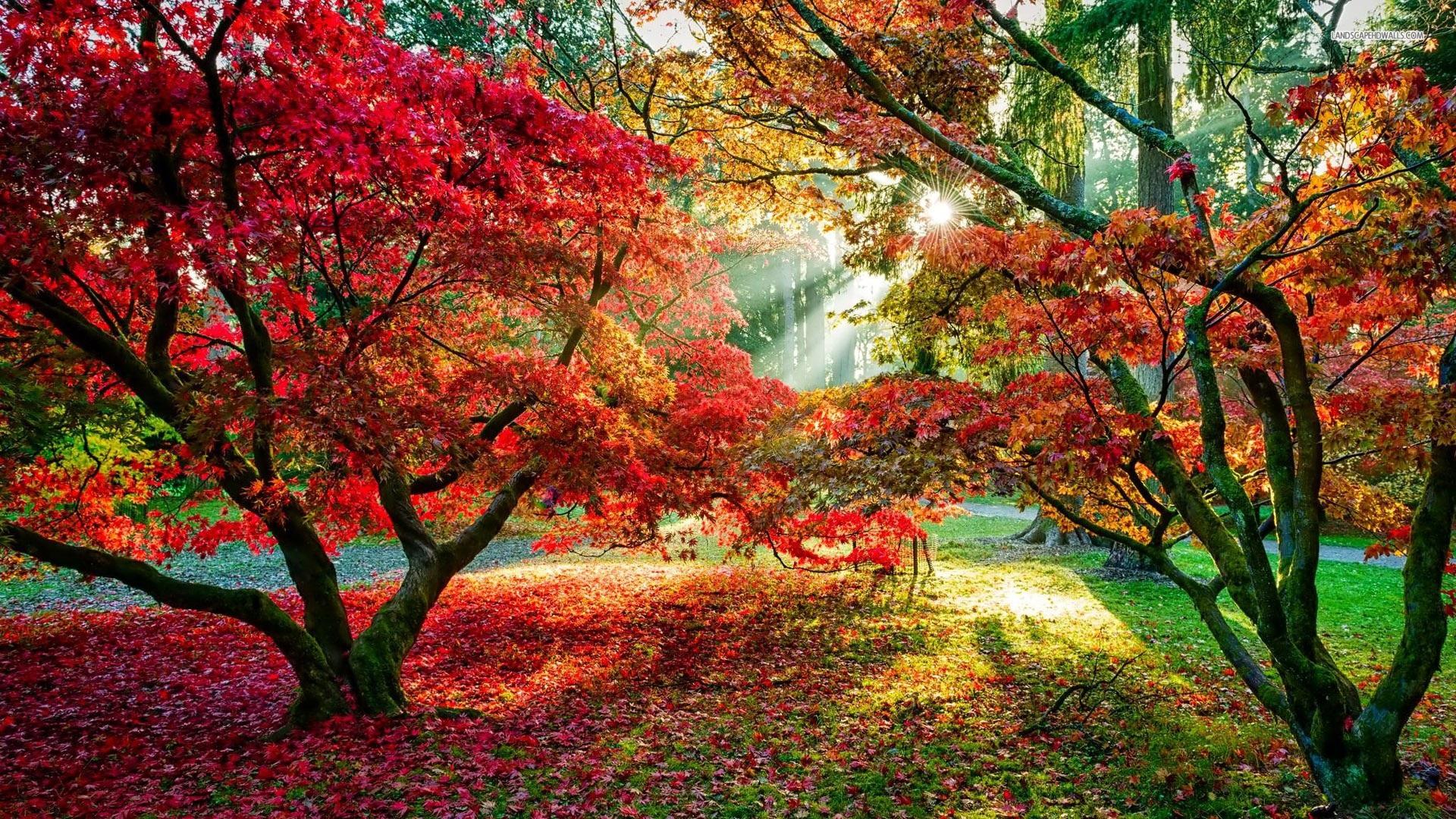壁紙 紅葉 赤い葉 太陽の光 秋 19x1080 Full Hd 2k 無料のデスクトップの背景 画像
