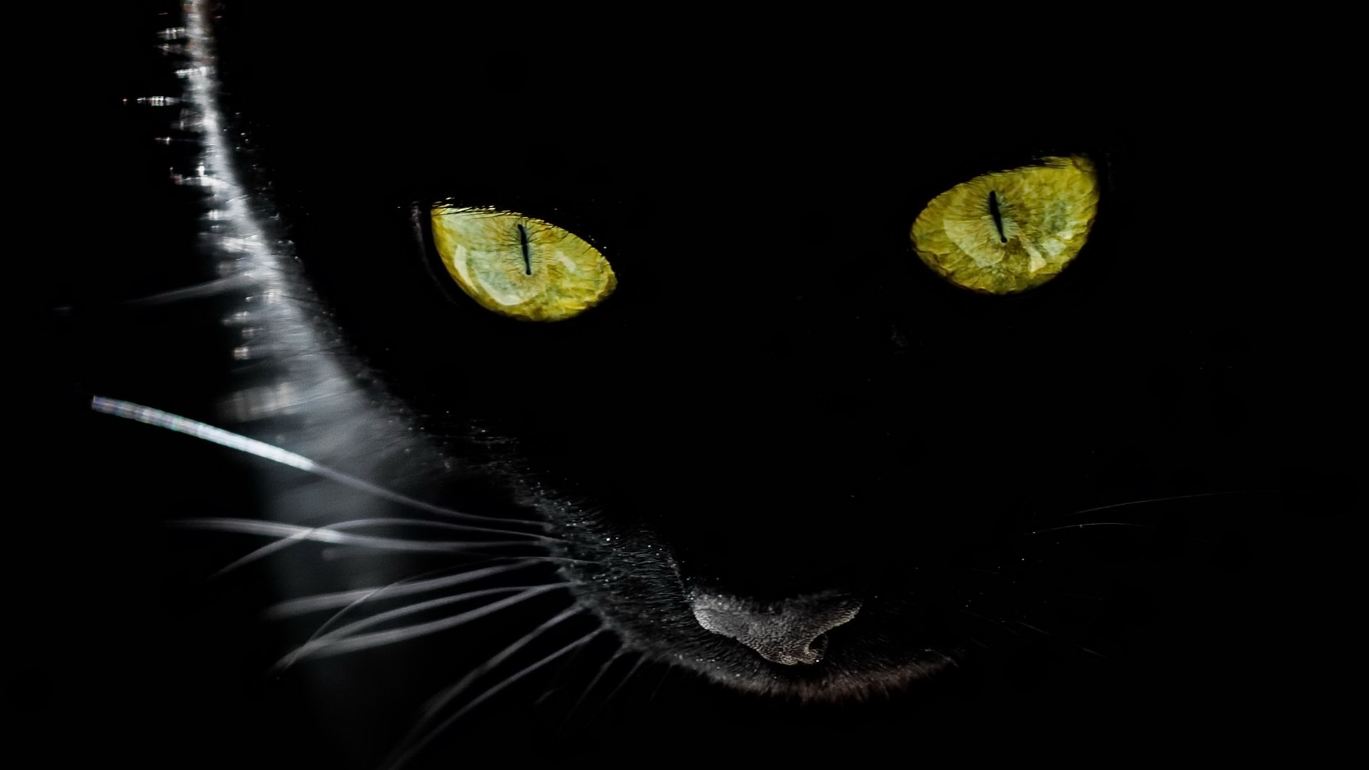 Wallpaper Black Cat Yellow Eyes Black Background Backlight 1920x1200 Hd Picture Image