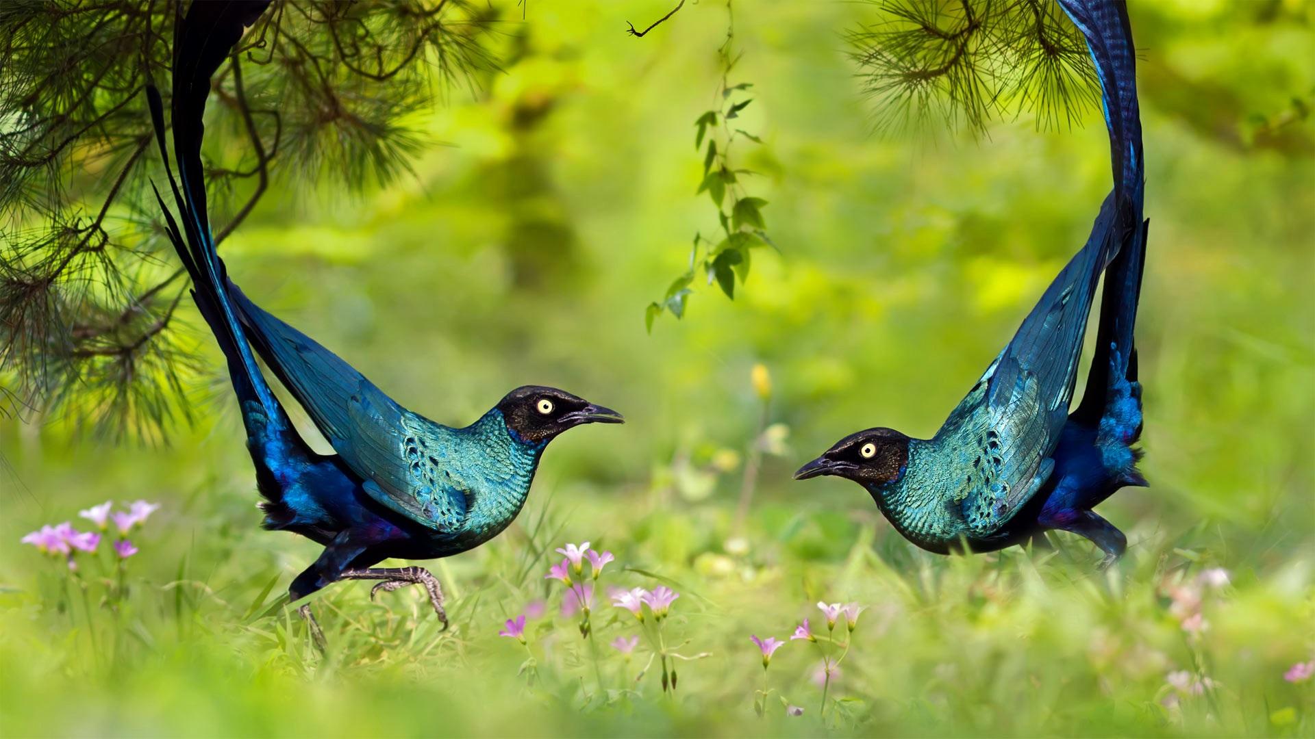удар стихии райские птицы картинки на рабочий стол этом каждого