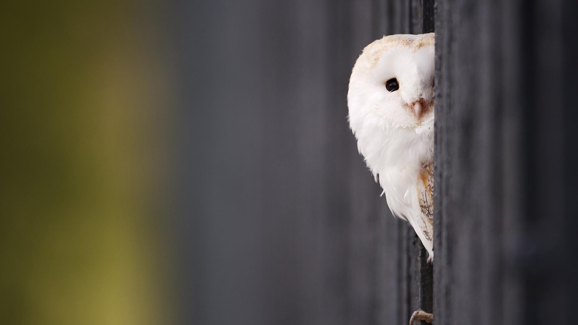 притаившиеся птички смотреть