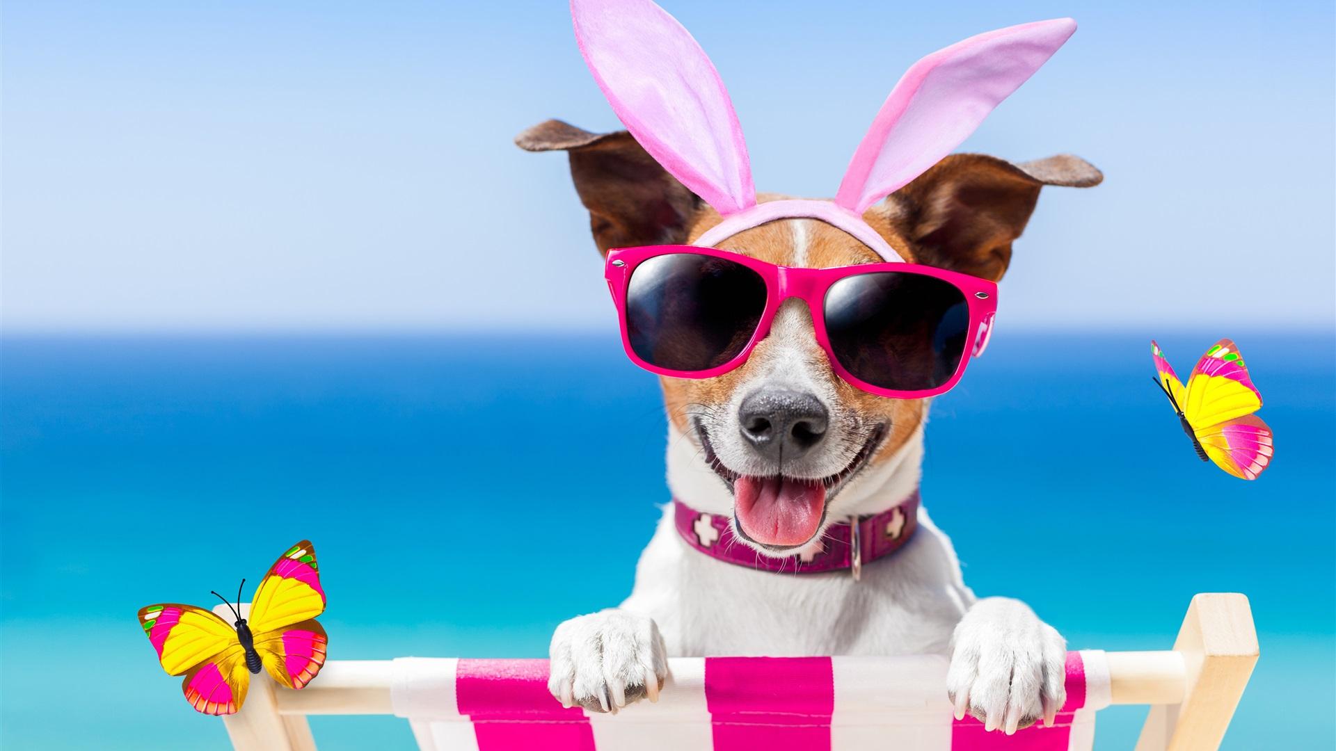 Fondos De Pantalla De Animales Graciosos: Perro Gracioso, Gafas, Mariposa, Verano Fondos De Pantalla