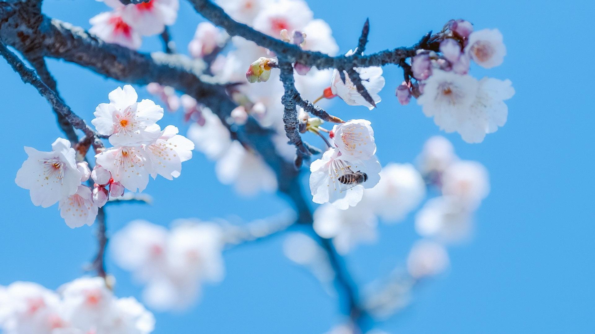 кино большие картинки весна на весь экран садоводами