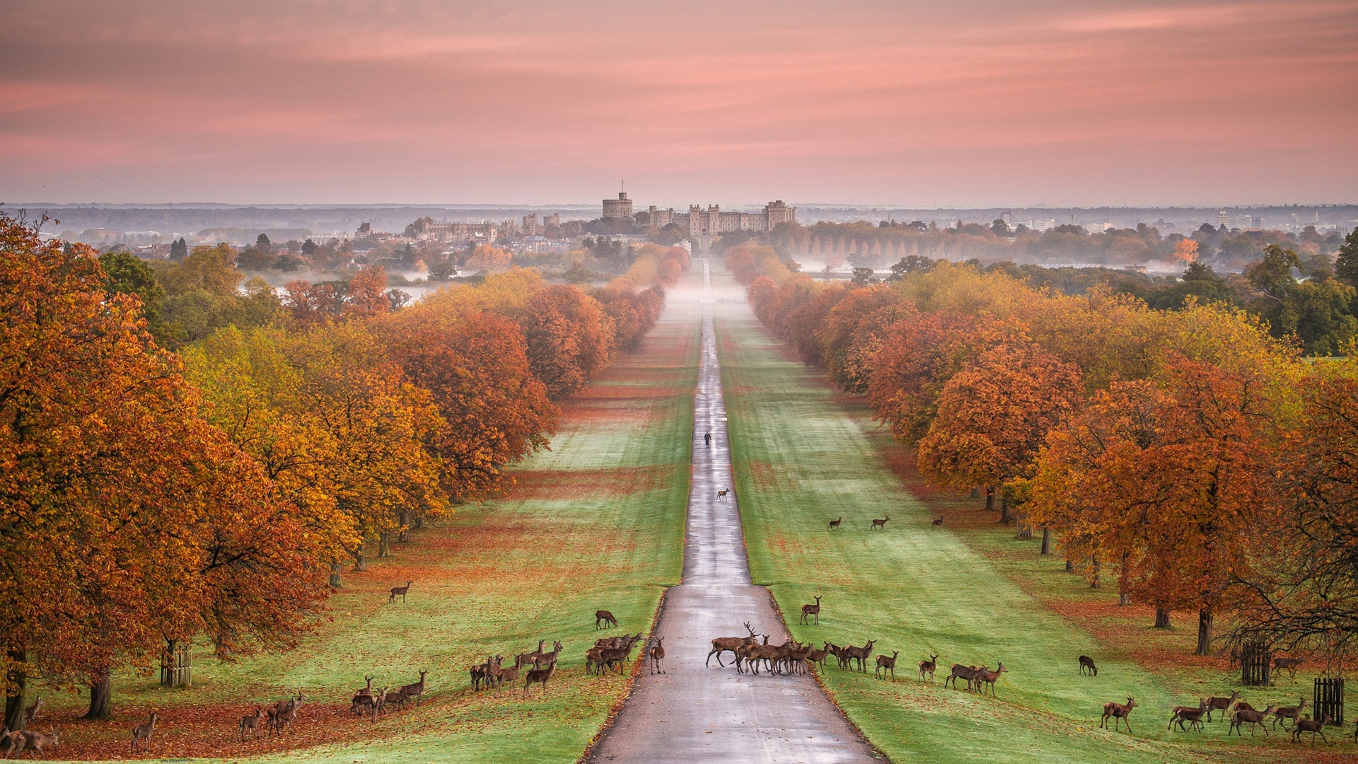 Wallpaper Windsor Castle, England, autumn, trees, road ...
