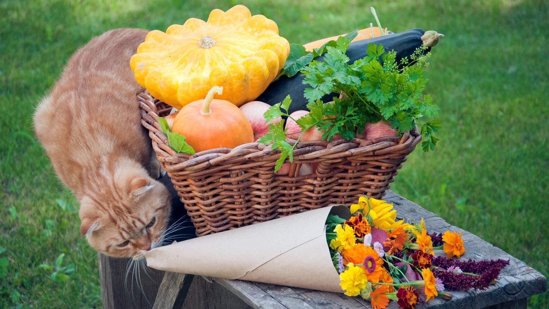 Download Wallpaper 1920x1080 Cat, Vegetables, Flowers