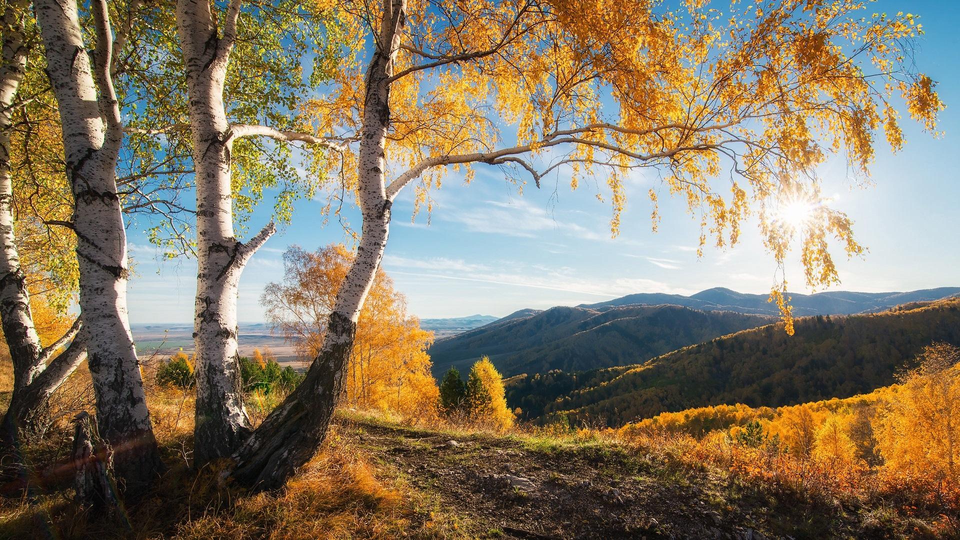 壁紙 秋 山 木 太陽 美しい自然の風景 19x1080 Full Hd 2k 無料のデスクトップの背景 画像