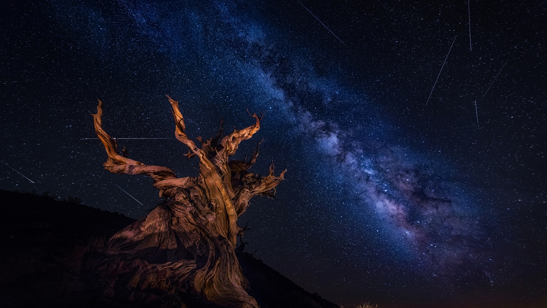Wallpaper Dry Tree Starry Sky Beautiful Night 1920x1440