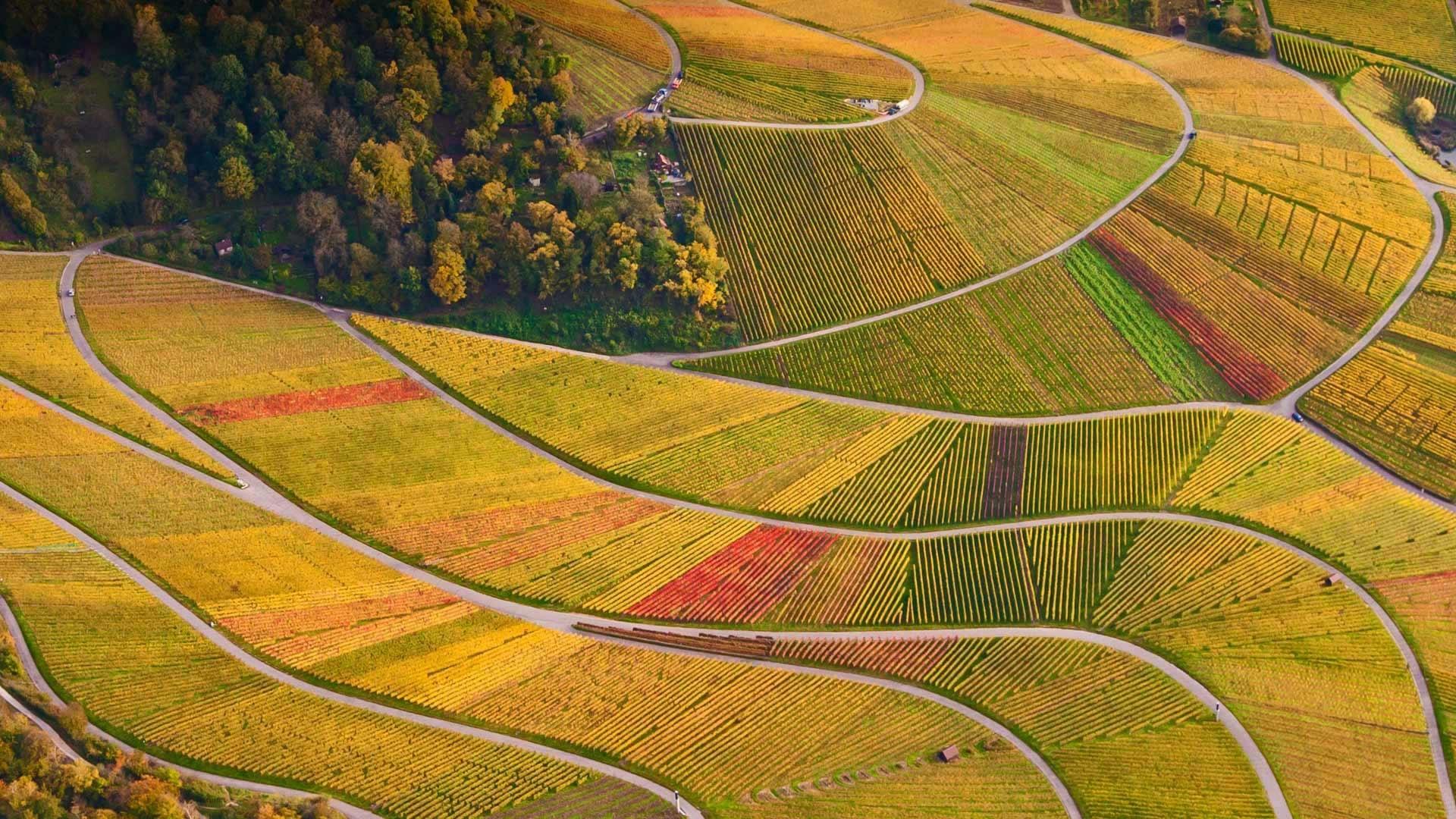 壁紙 ドイツ バーデン ヴュルテンベルク州 樹木 ブドウ畑 美しい