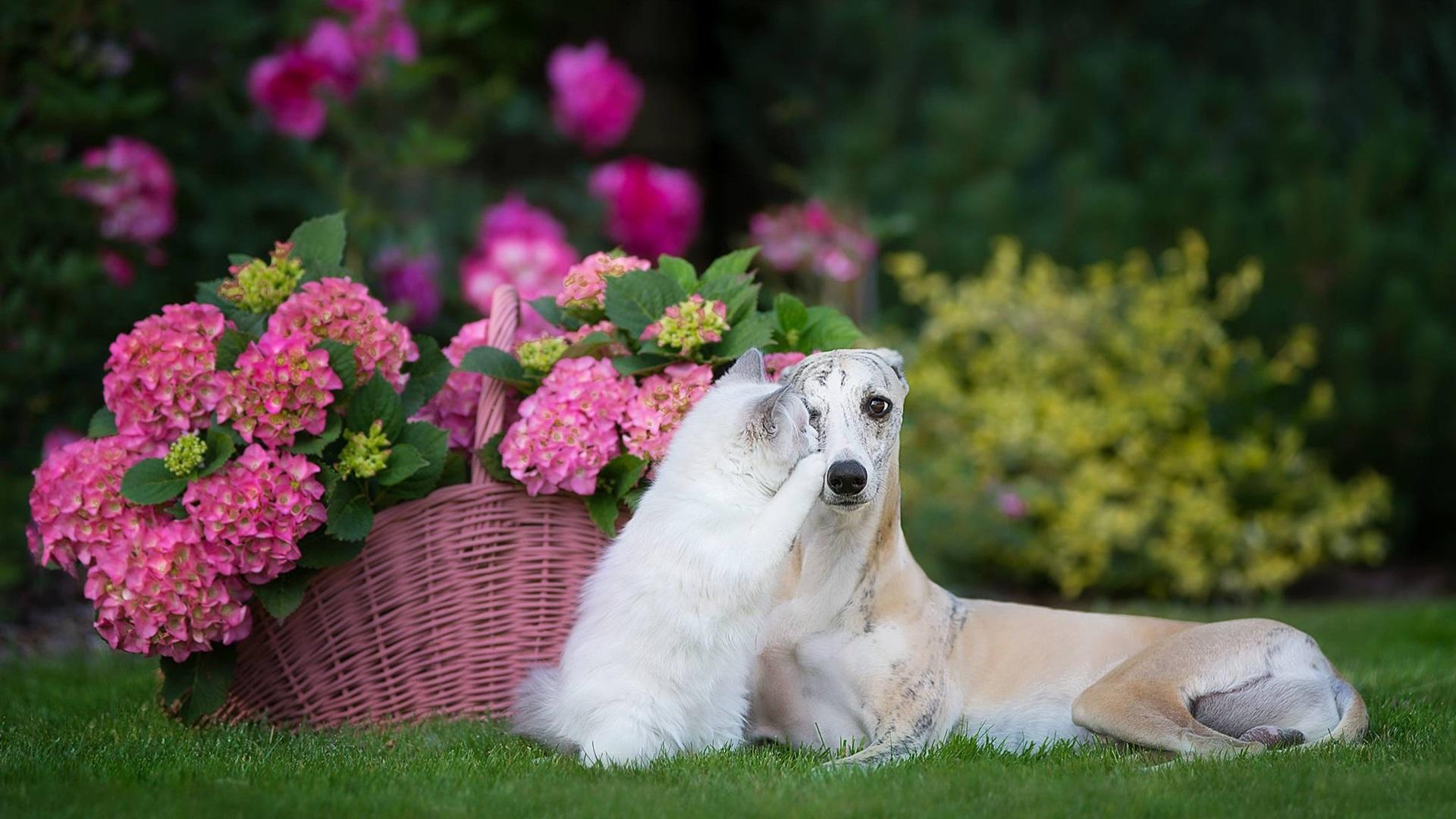 Картинки с котятами и собаками и цветами