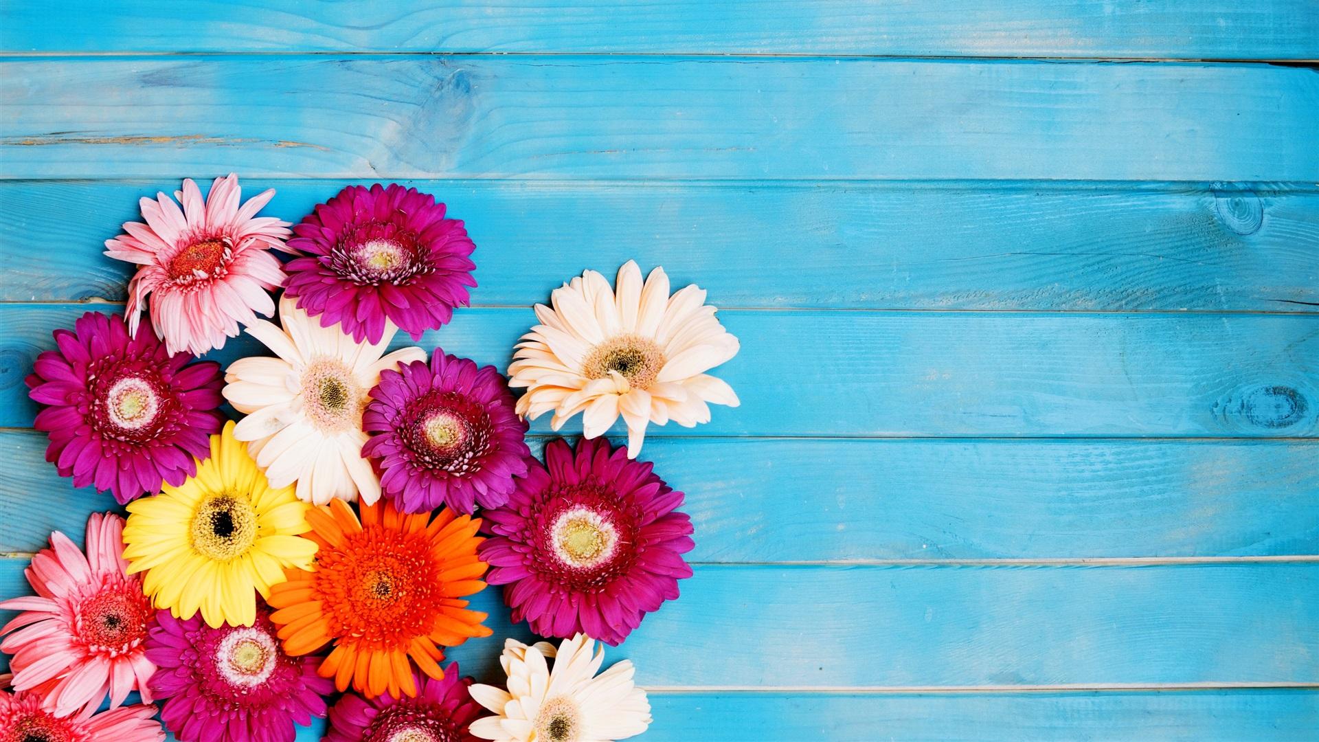 Flores Coloridas Del Gerbera, Fondo Azul 750x1334 IPhone 8
