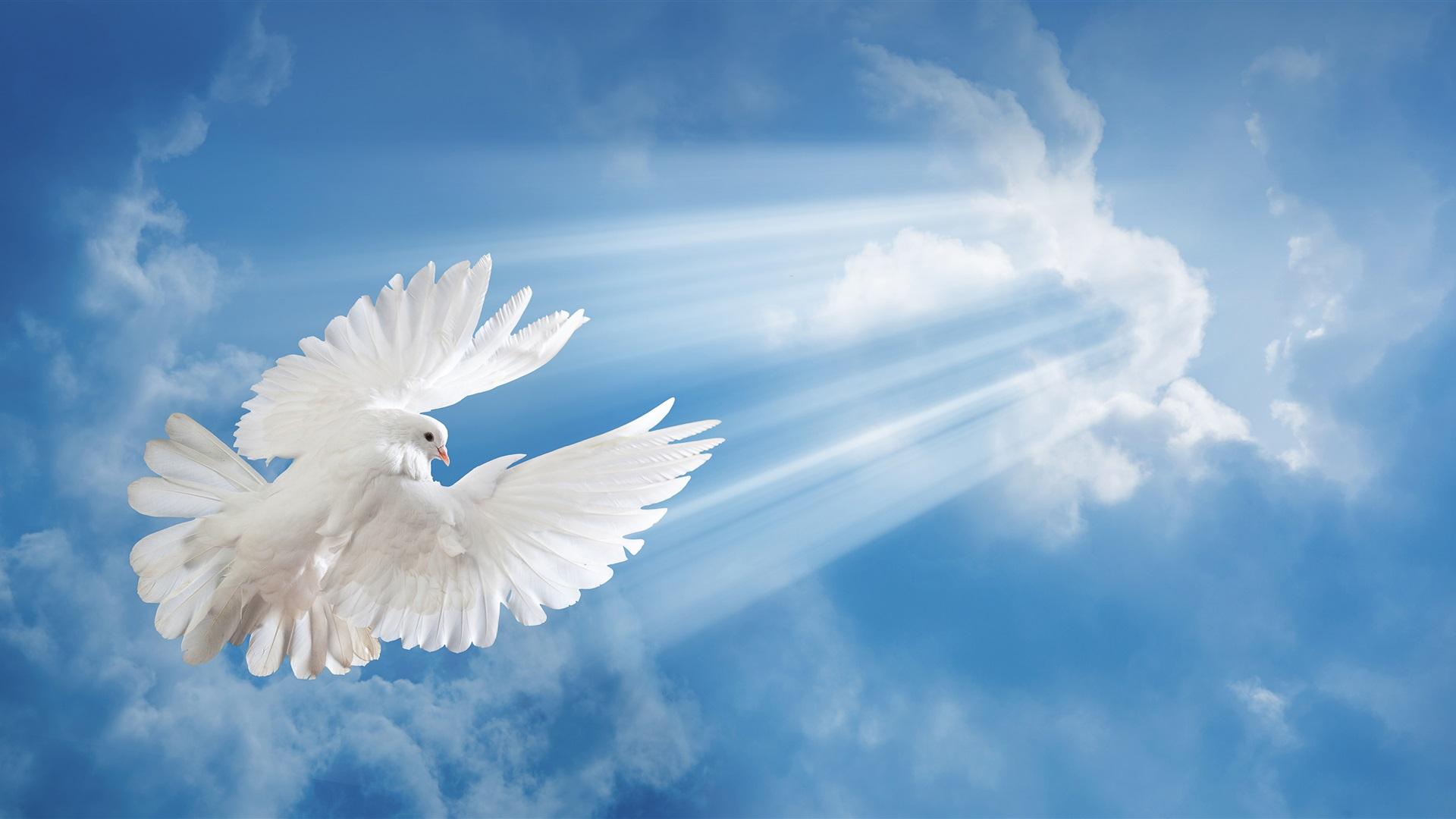 изготавливаются драгоценных голубь в лучах солнца картинка мышцы накладывают