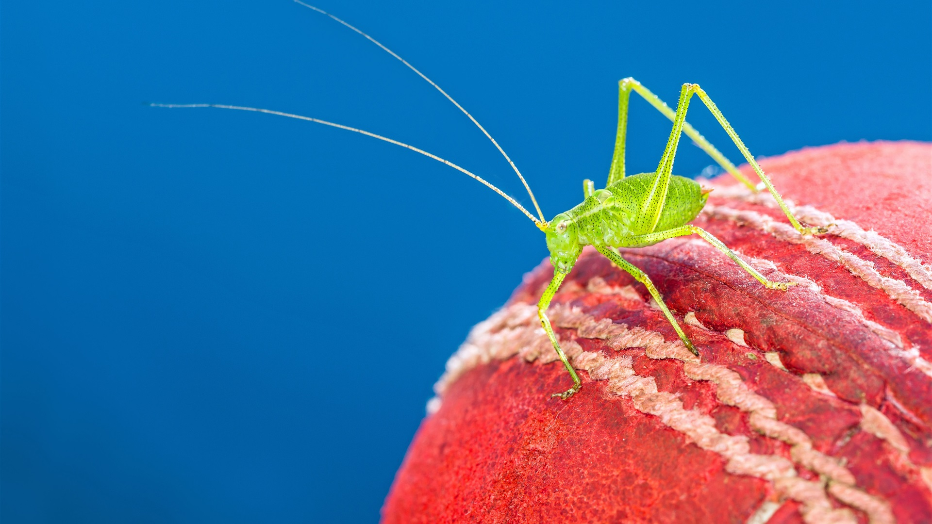wallpaper cricket ball  green insect 3840x2160 uhd 4k
