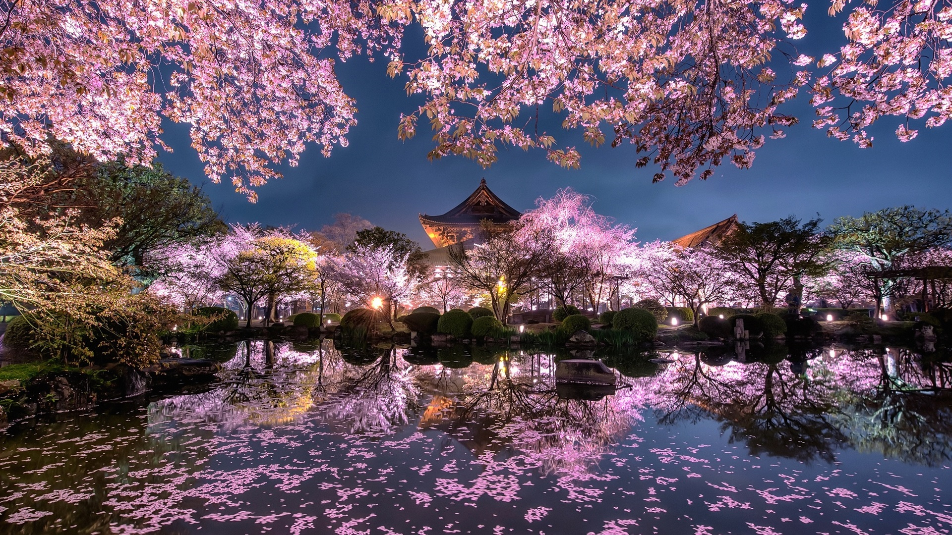 Wallpaper Japan Sakura Trees Pink Flowers Night Pond Temple Garden 1920x1200 Hd Picture Image