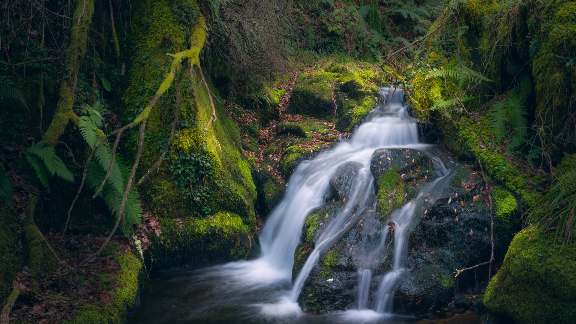 Wallpaper Moss Stream Waterfall 1920x1200 Hd Picture Image