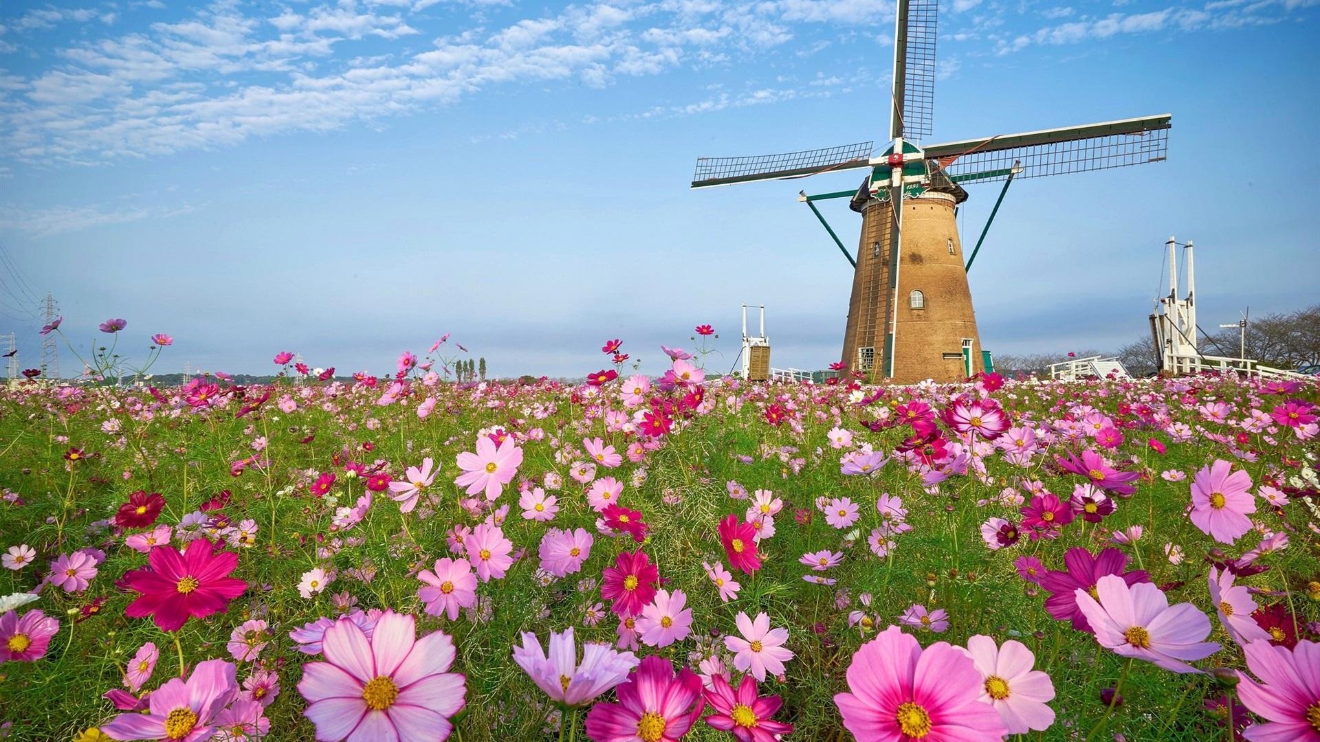 роз, ветряная мельница и лаванда фото кто-то просто очень