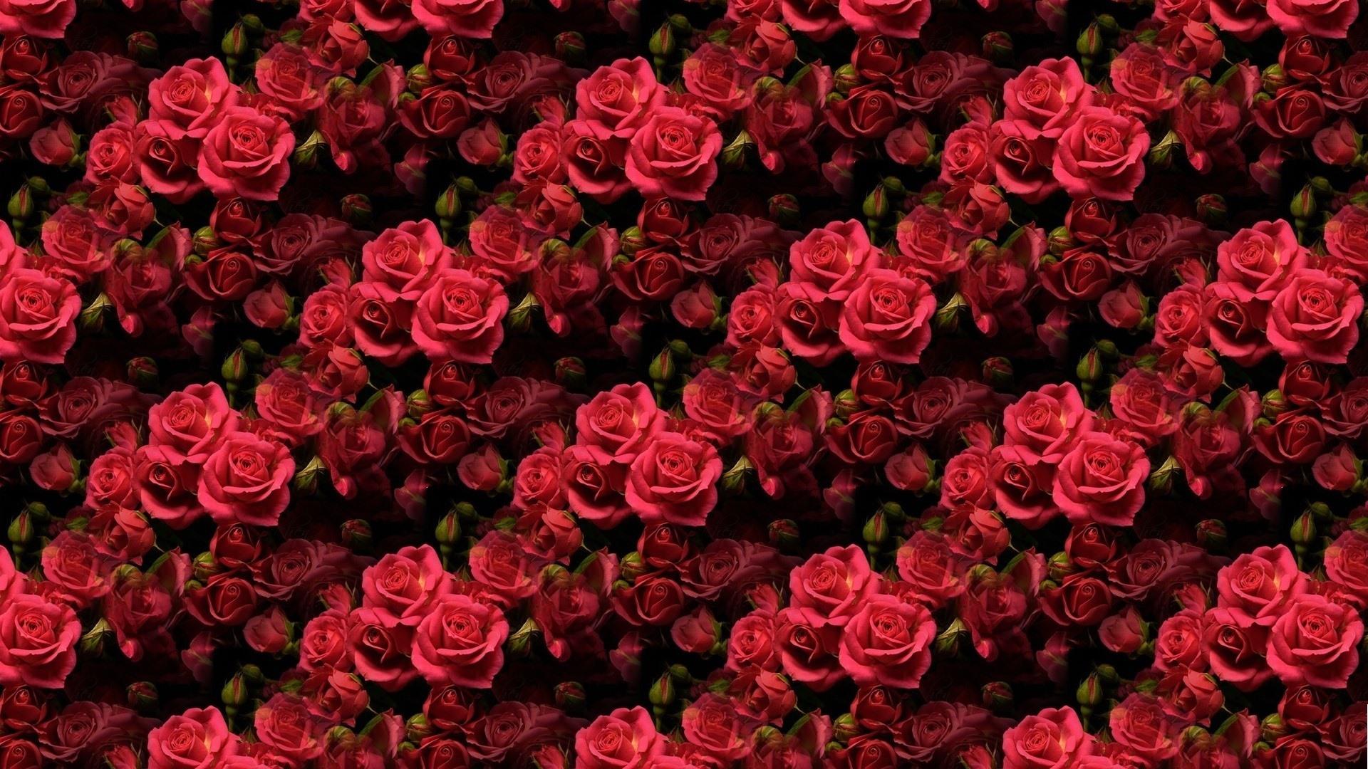 Wallpapers Rosas Rojas: Fondos De Pantalla Muchas Rosas Rojas, Fondo De Textura