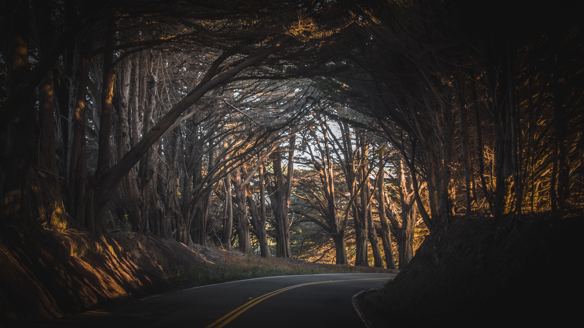 Wallpaper Trees Forest Road Channel 3840x2160 Uhd 4k Picture Image