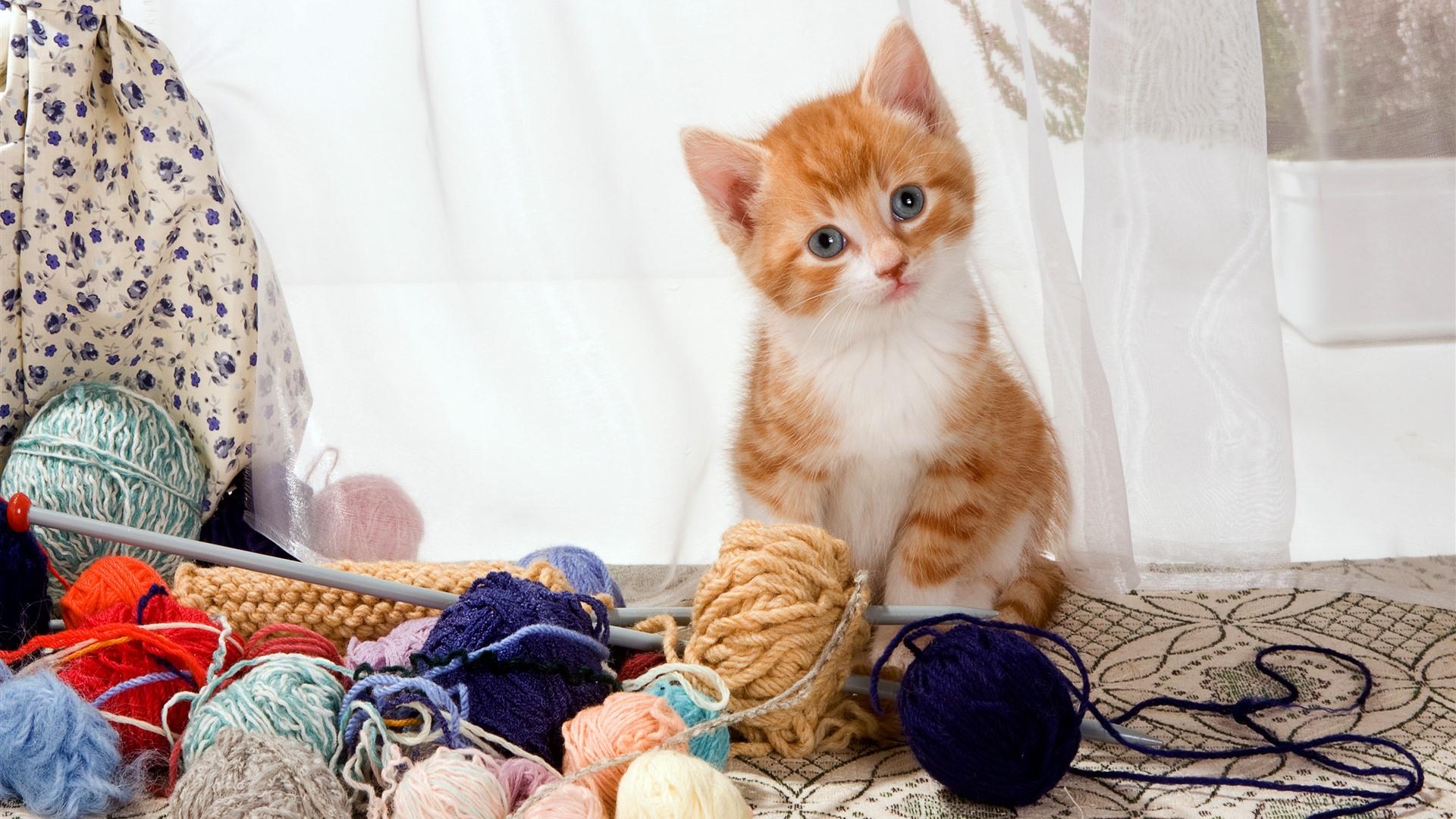 Cute Kitten And Wool Balls 1125x2436 IPhone XS/X Wallpaper