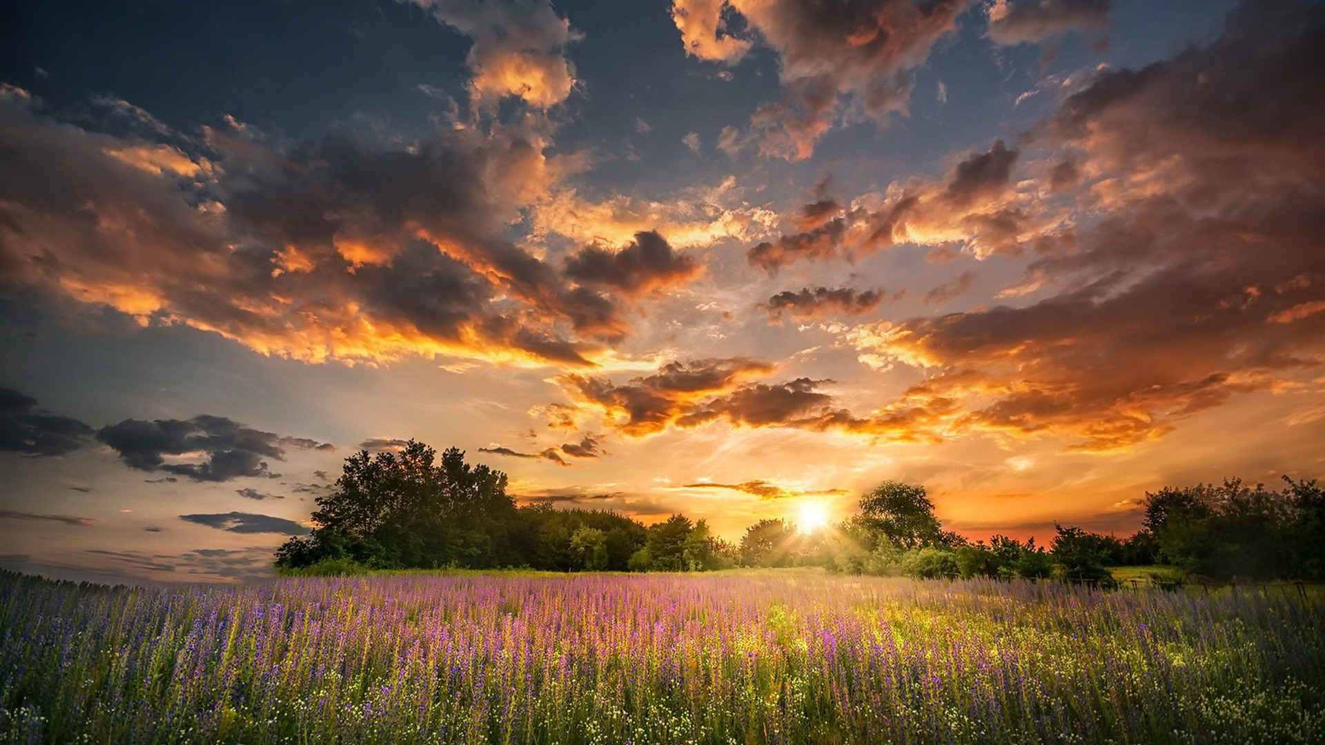 Wallpaper Summer Flowers Sunset Clouds Nature 1920x1200