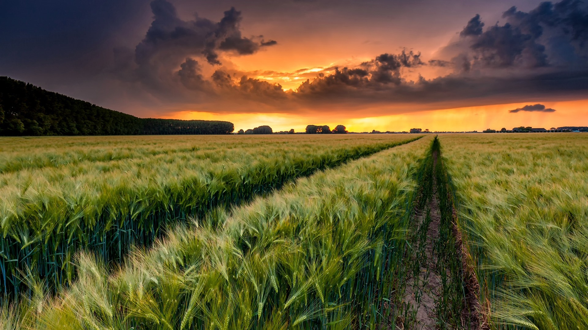 Wheat Fields Clouds Sunset Countryside 750x1334 Iphone 8