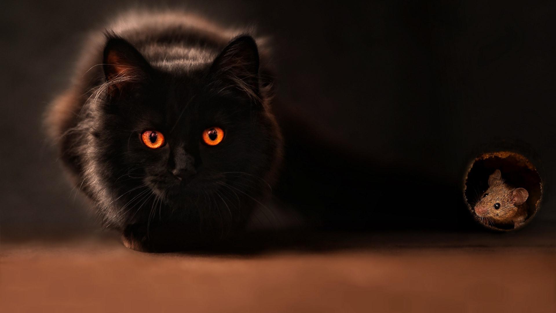 壁紙 黒猫 オレンジ目 マウス 2560x1600 Hd 無料のデスクトップの背景 画像