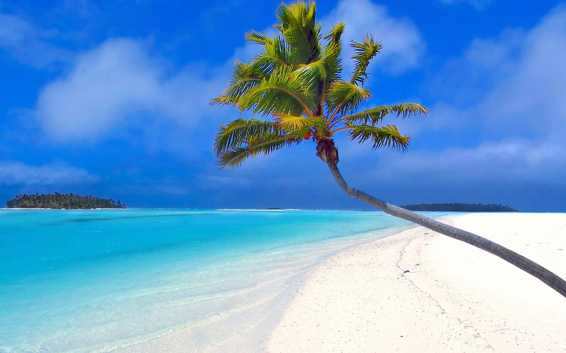 Hd Tropical Island Beach Paradise Wallpapers And Backgrounds: Wallpaper Beach By A Coconut Tree 1920x1200 HD Picture, Image