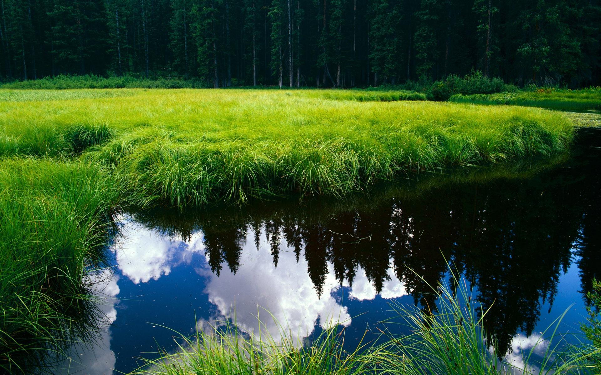 картинки деревья цветы трава вода промахиваюсь фотка