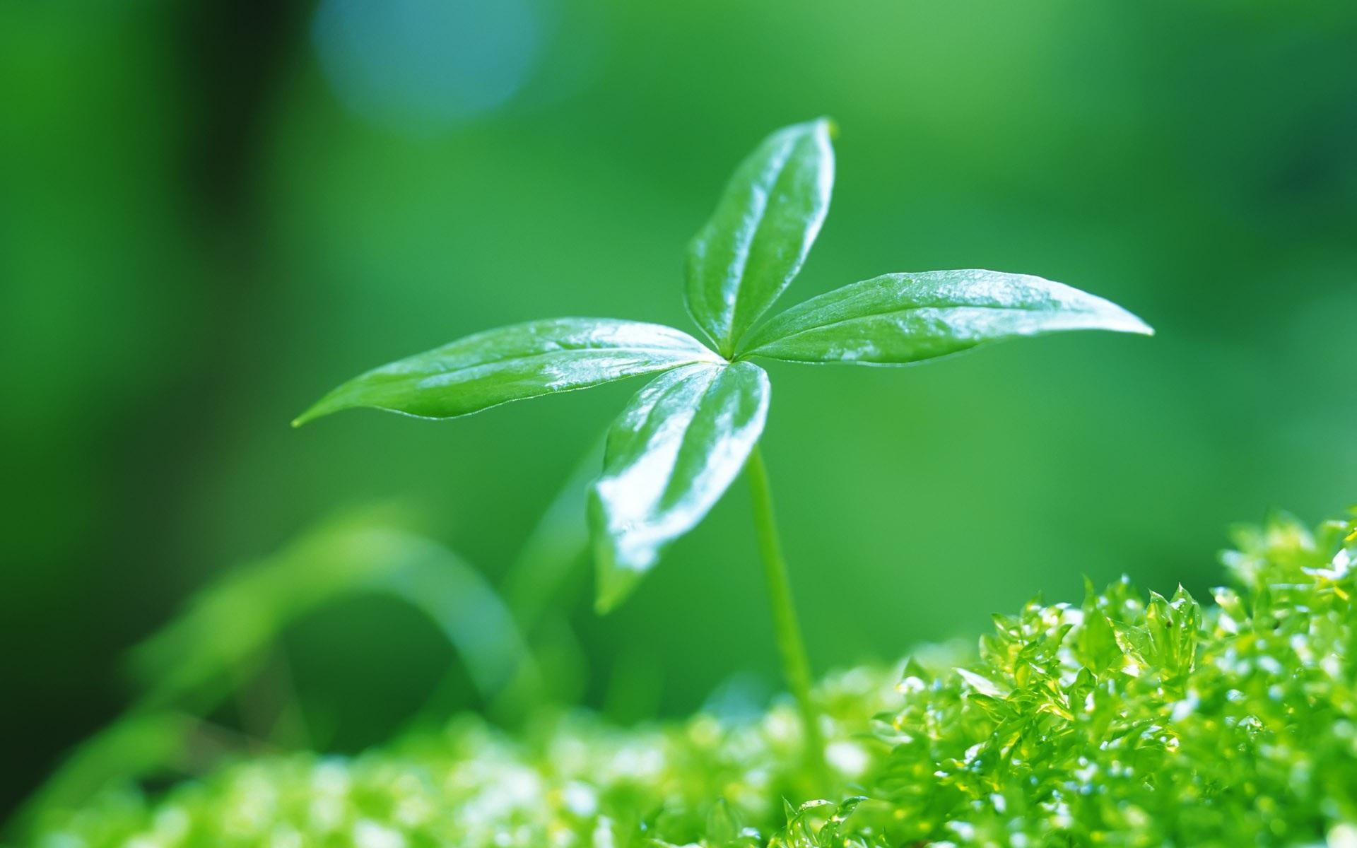 刚发芽的嫩绿叶子 1920x1200图片