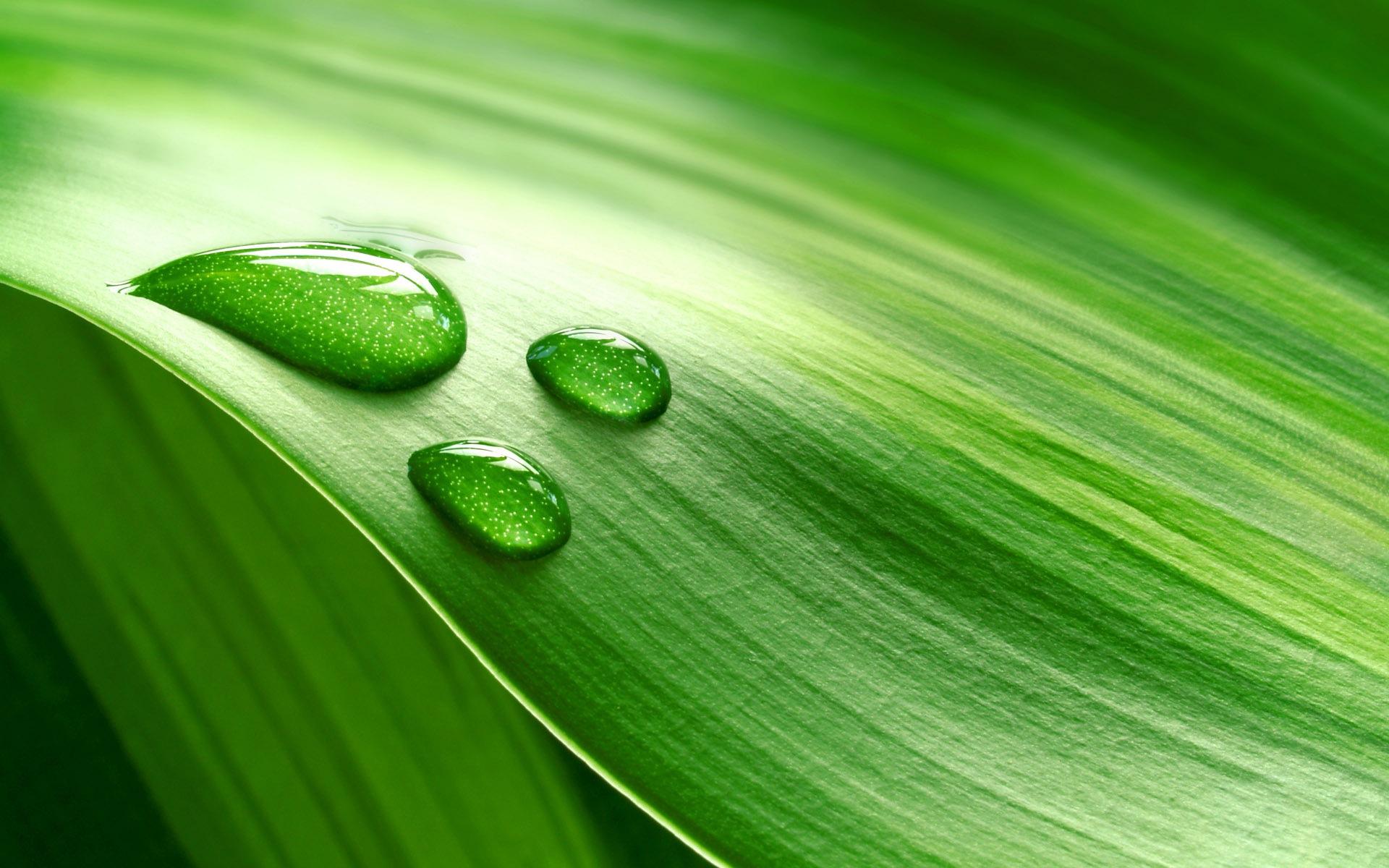 Pedazo de hojas frescas de color verde con las gotas de - Color verde hoja ...