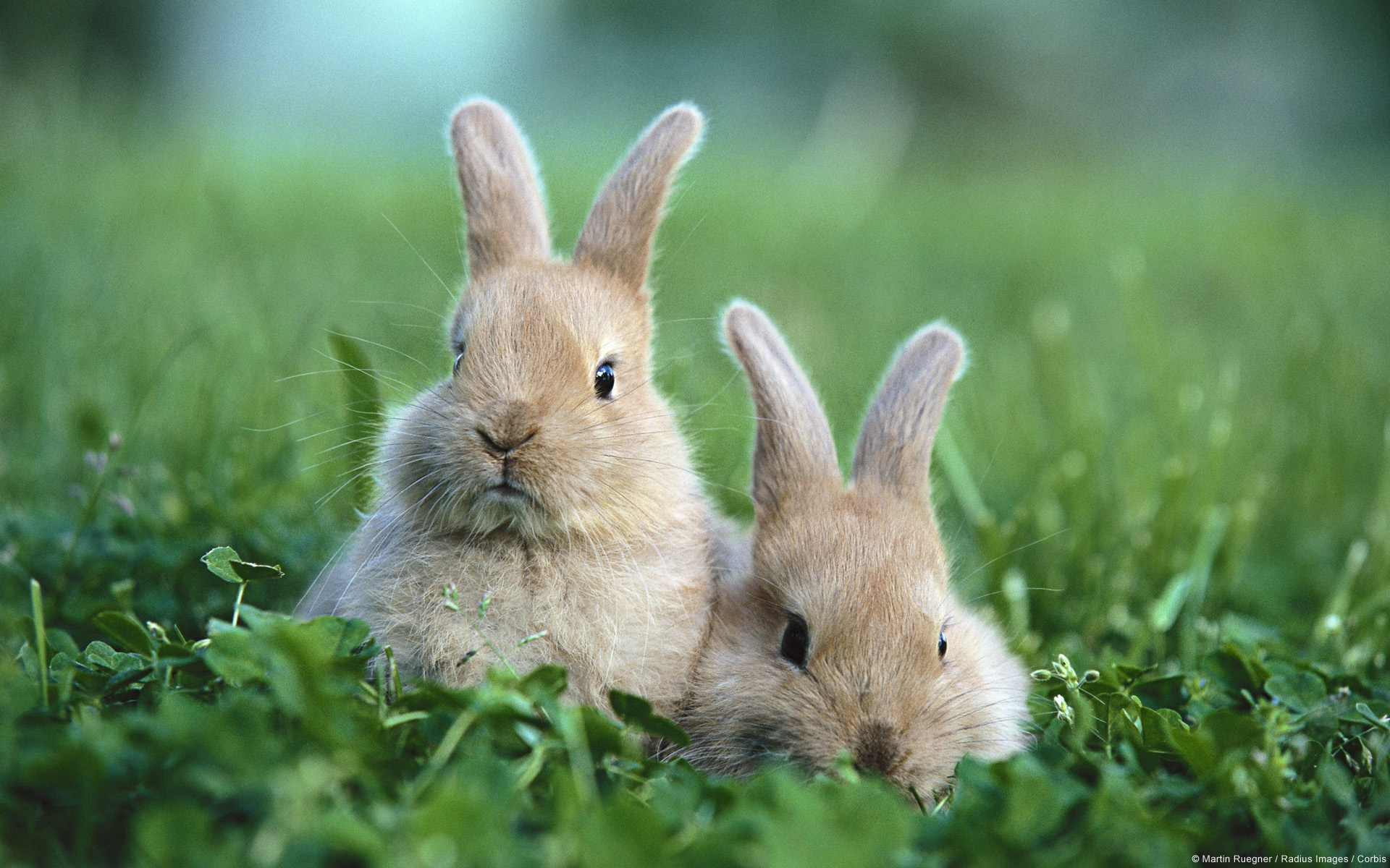 природа животные заяц nature animals hare  № 103296 загрузить