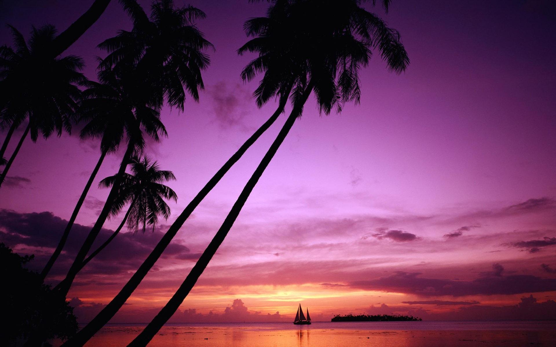 download hintergrundbilder 1920x1200 sonnenuntergang palme