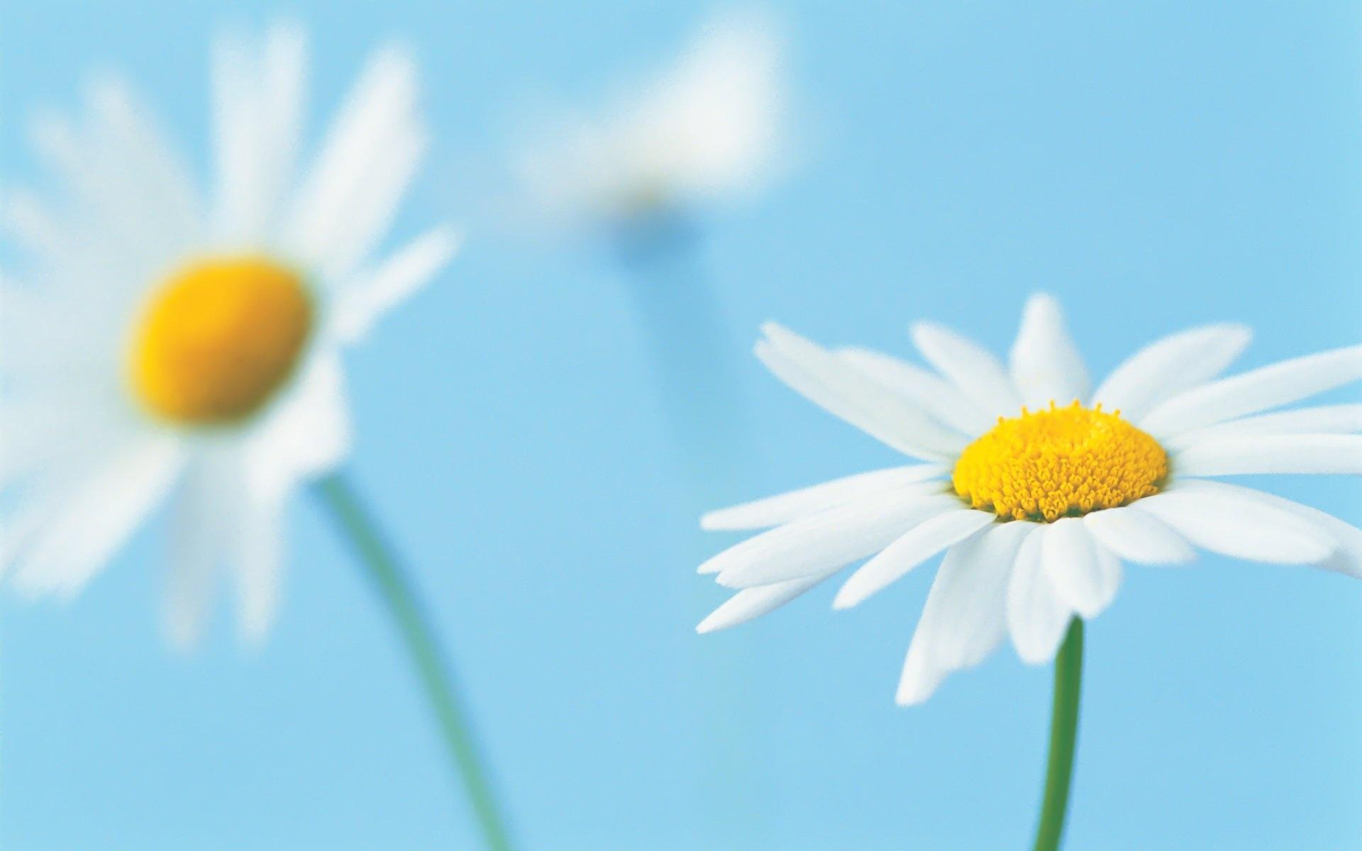 ... Blumen Hintergrundbilder ...