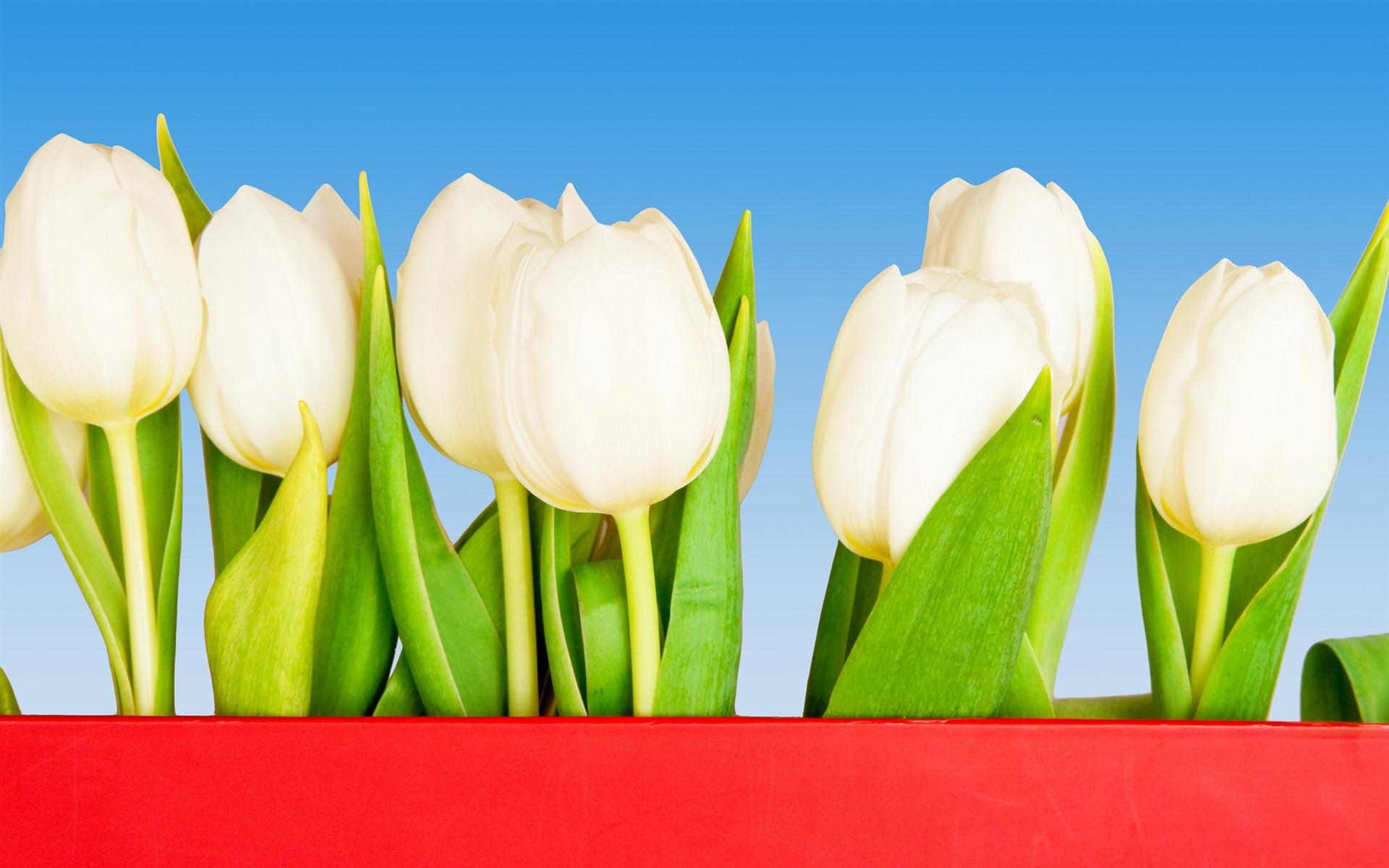 Юбилеем коллег, картинки фон тюльпаны