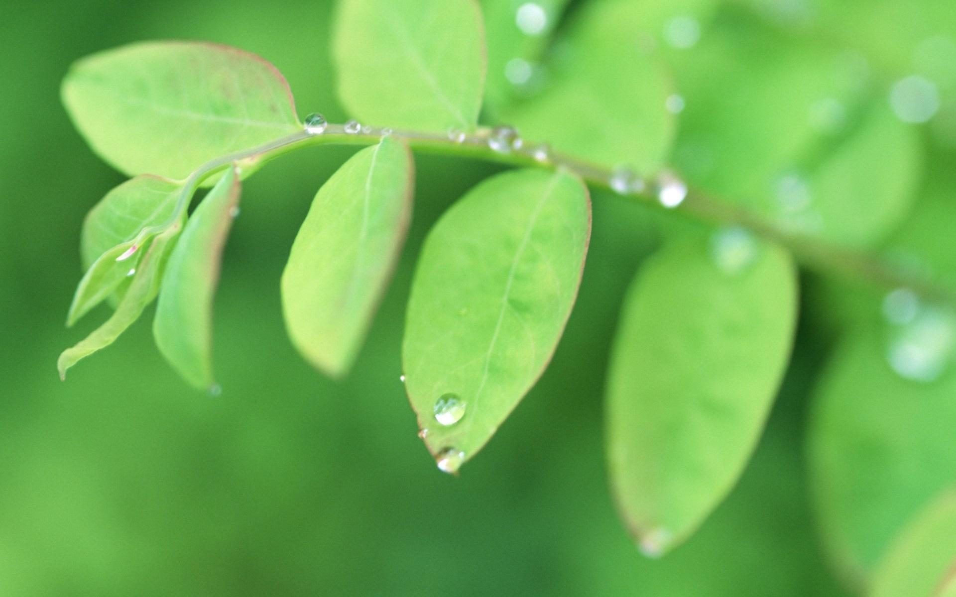 листья зелень фокус  № 1341623 без смс