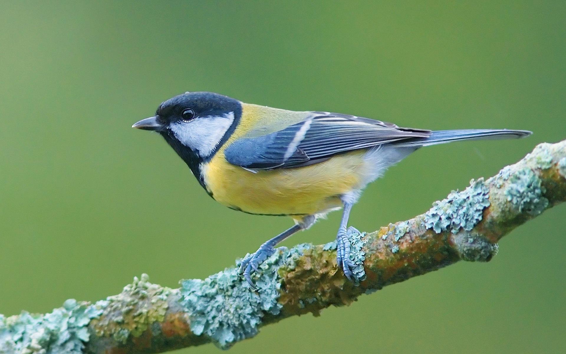 Pájaro en una rama fondos de pantalla - 1920x1200