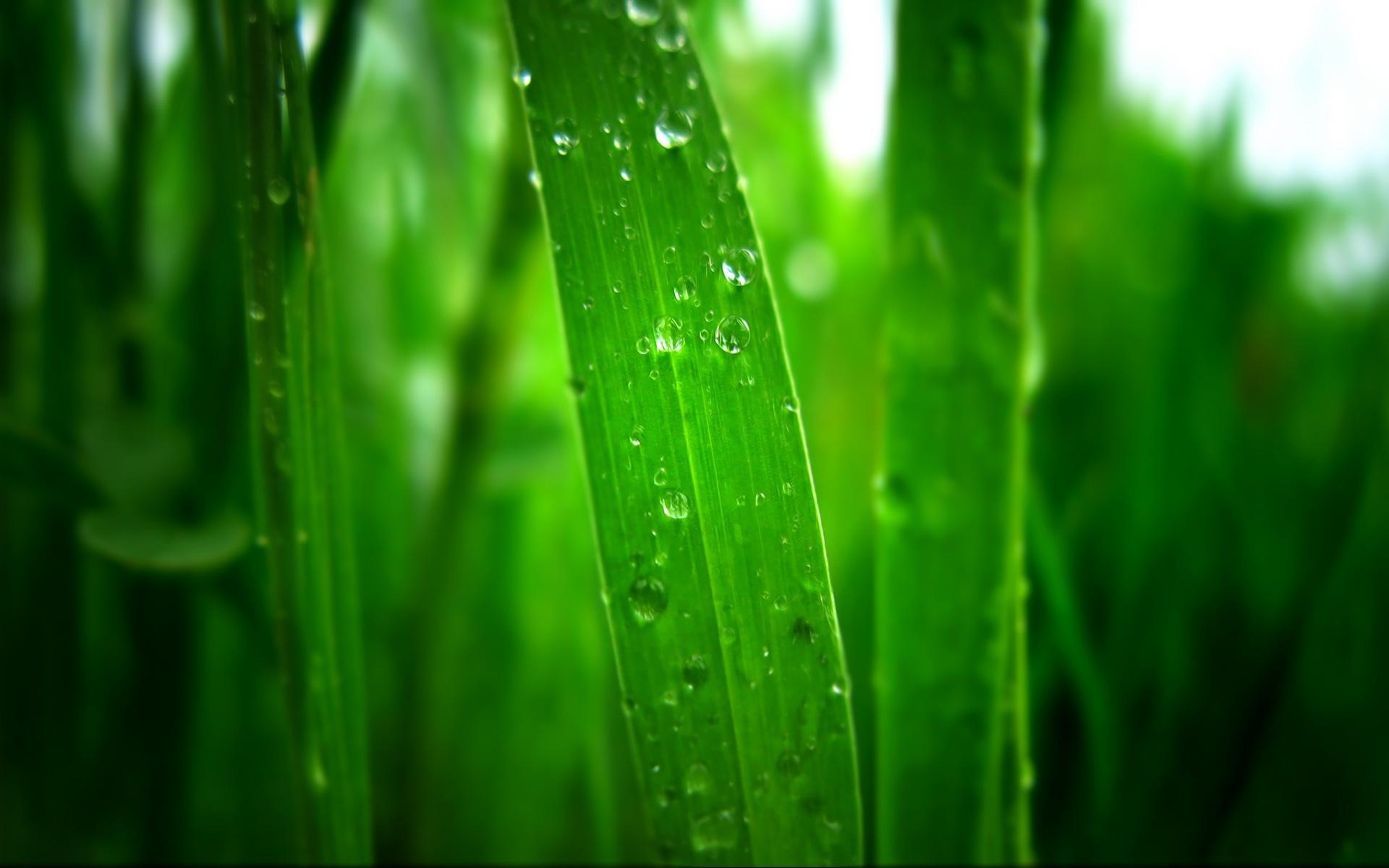 清晨绿草上的露珠 壁纸 - 1920x1200