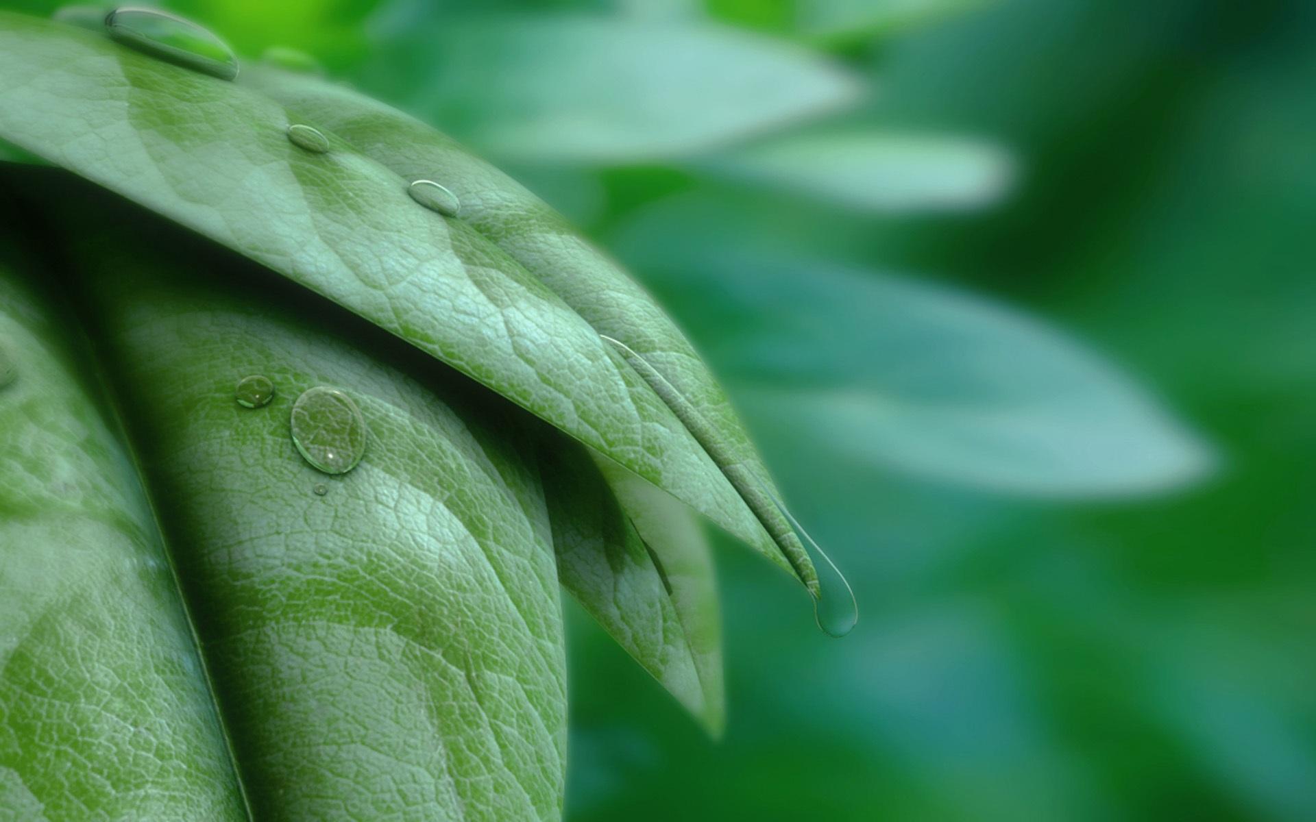 капли листки лес скачать