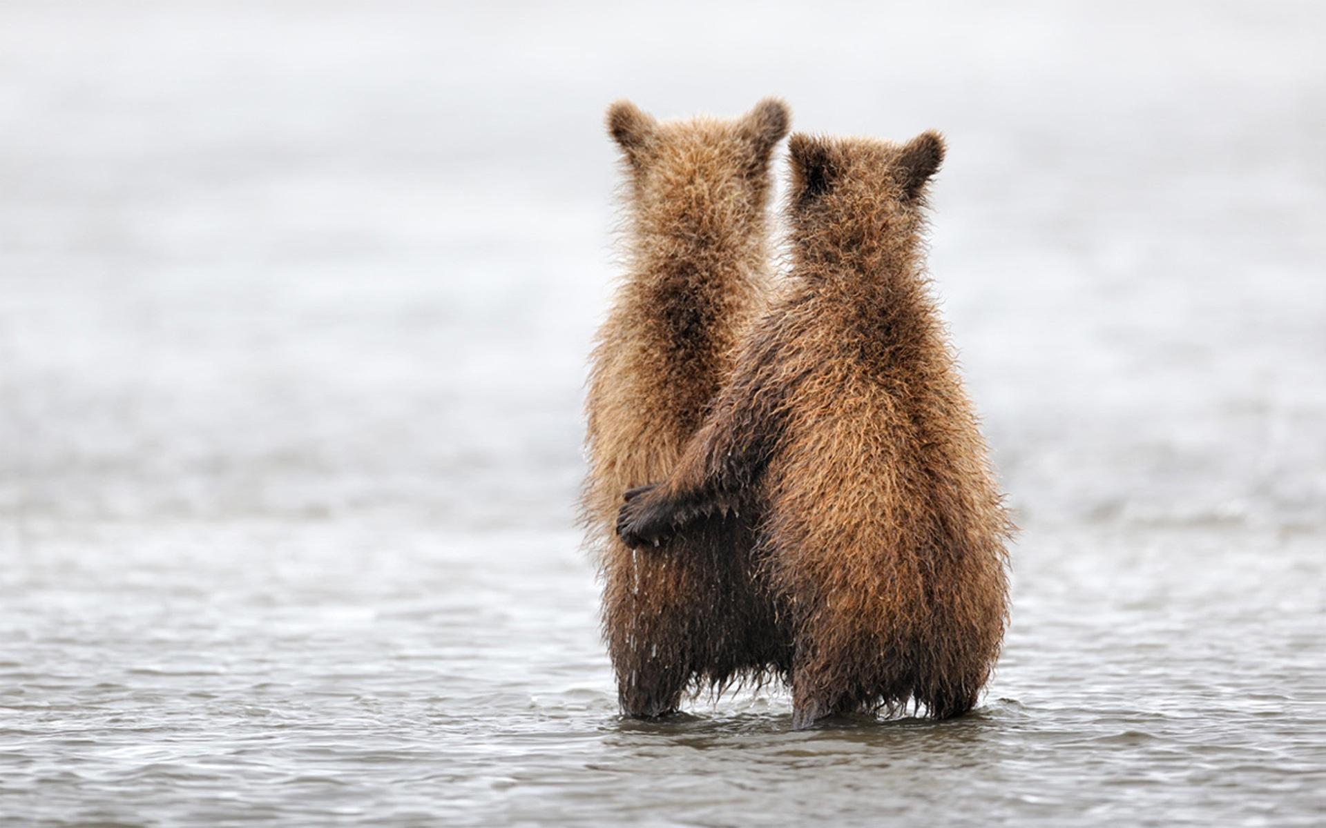 Deux ours mignon fonds d écran 1920x1200 description deux ours mignon