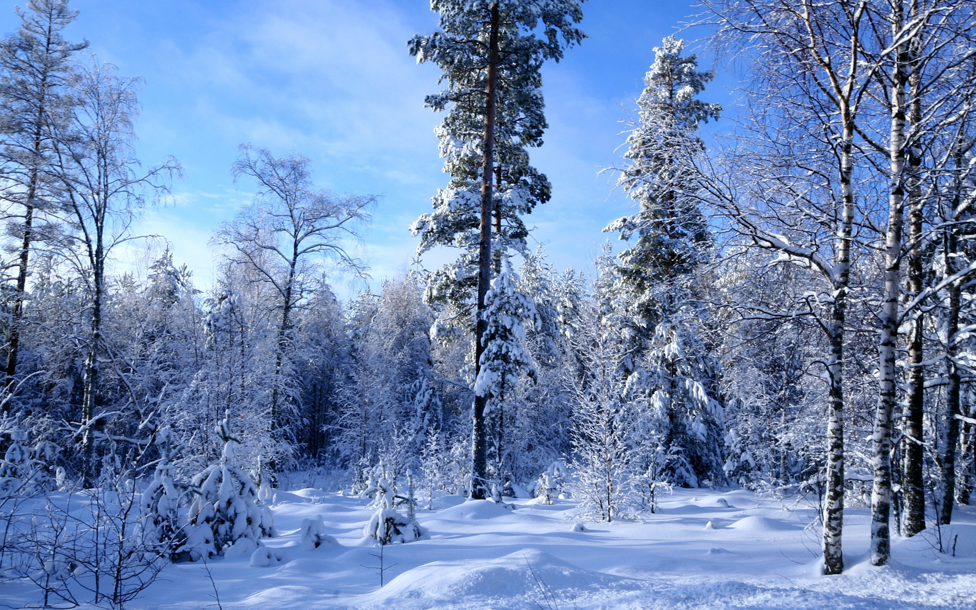 snowy forest white tree branches winter themed 多くの冬の森の雪 壁紙 1920x1200 壁紙ダウンロード ja best wallpaper net 255