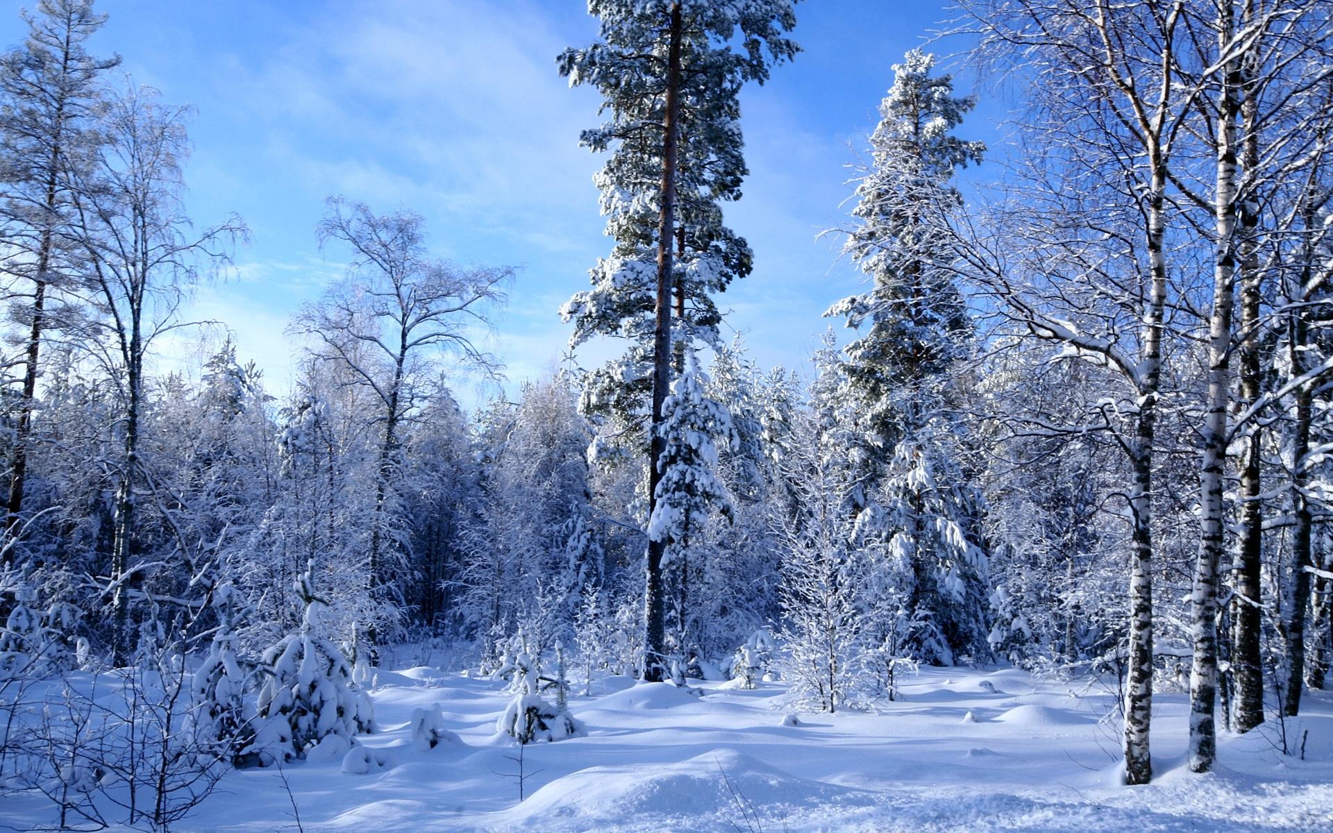 Обои 1920x1200 скачать обои зимний лес