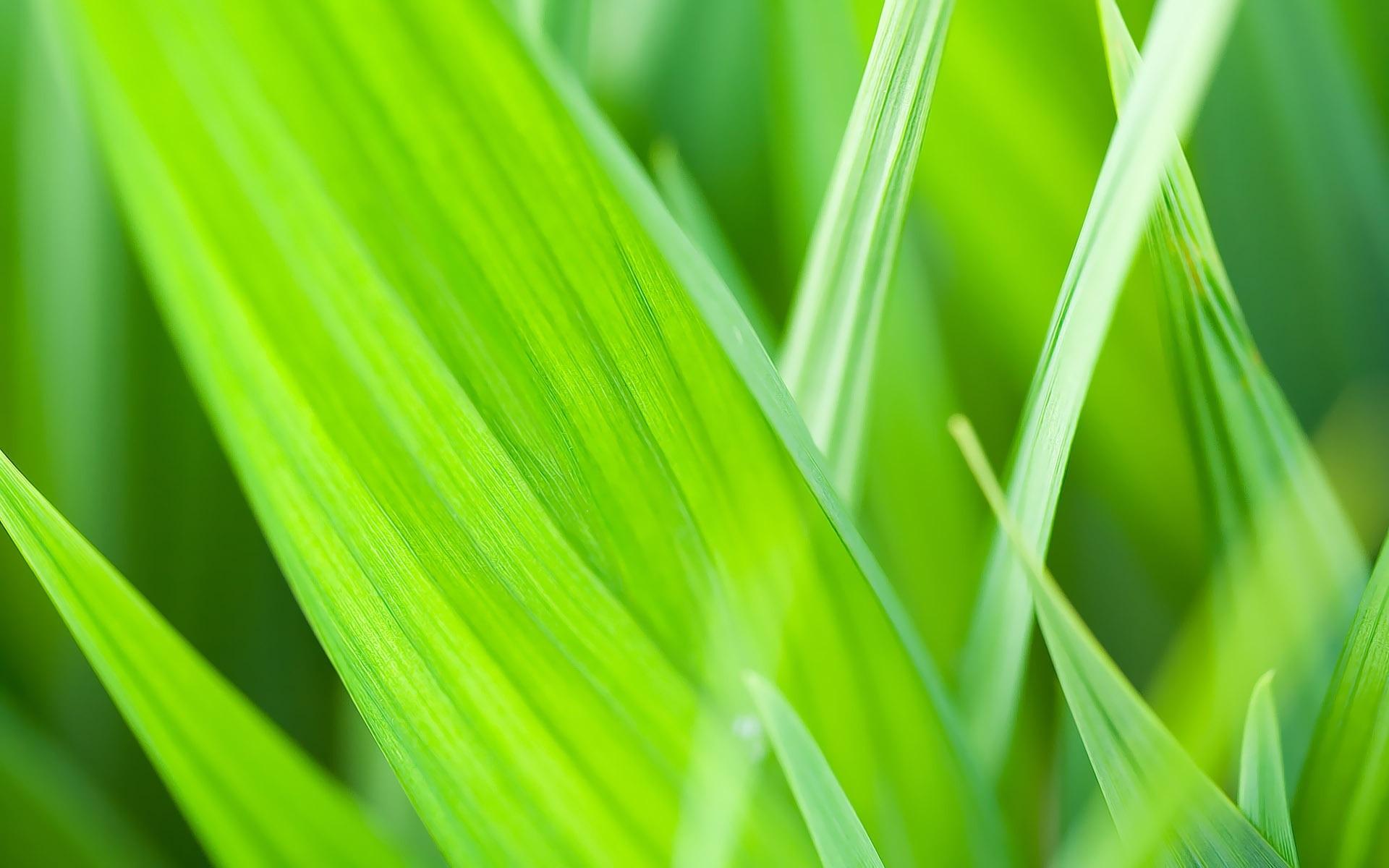 Зеленая, летняя трава  № 1074288 без смс