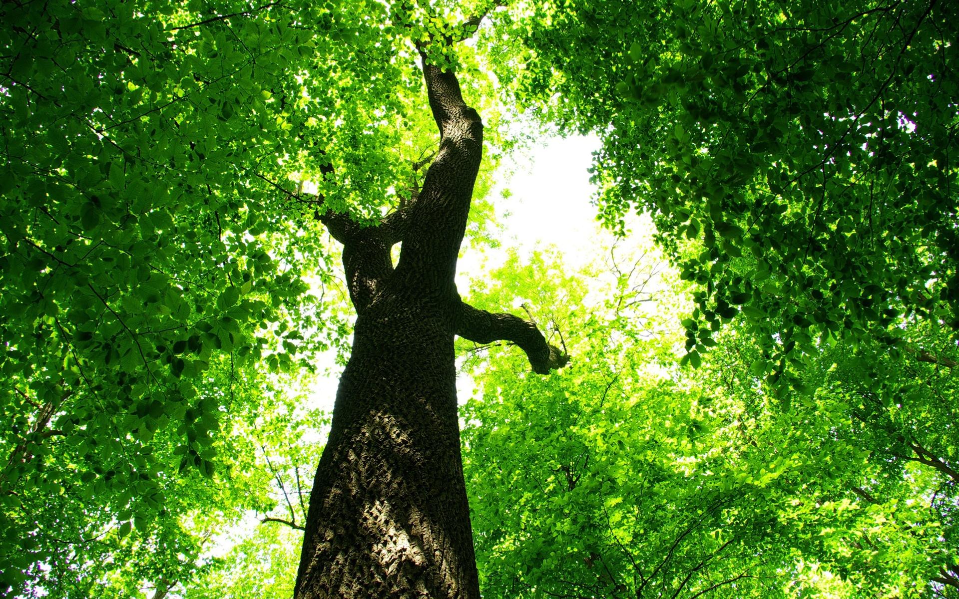 Зелень деревья листва бесплатно